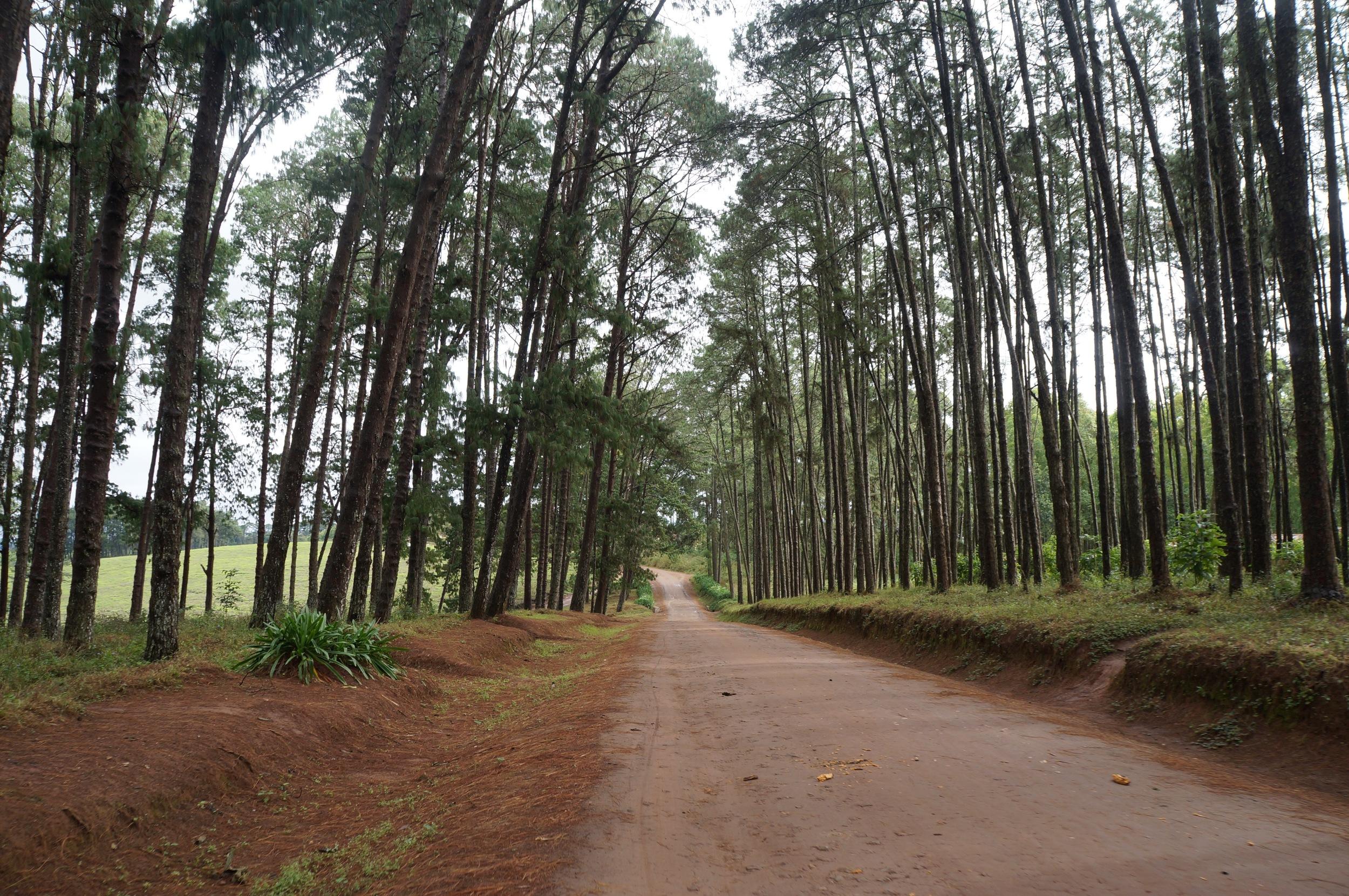 Tea Estate Road