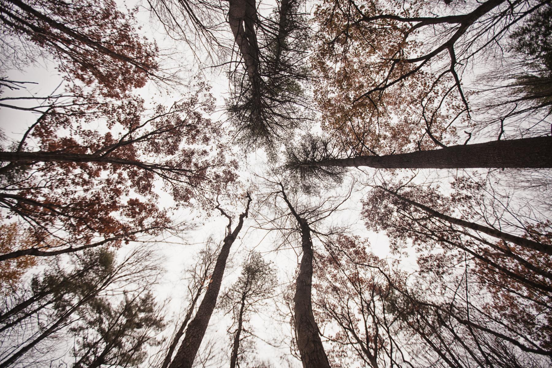 trees-sky-farm-1.jpg