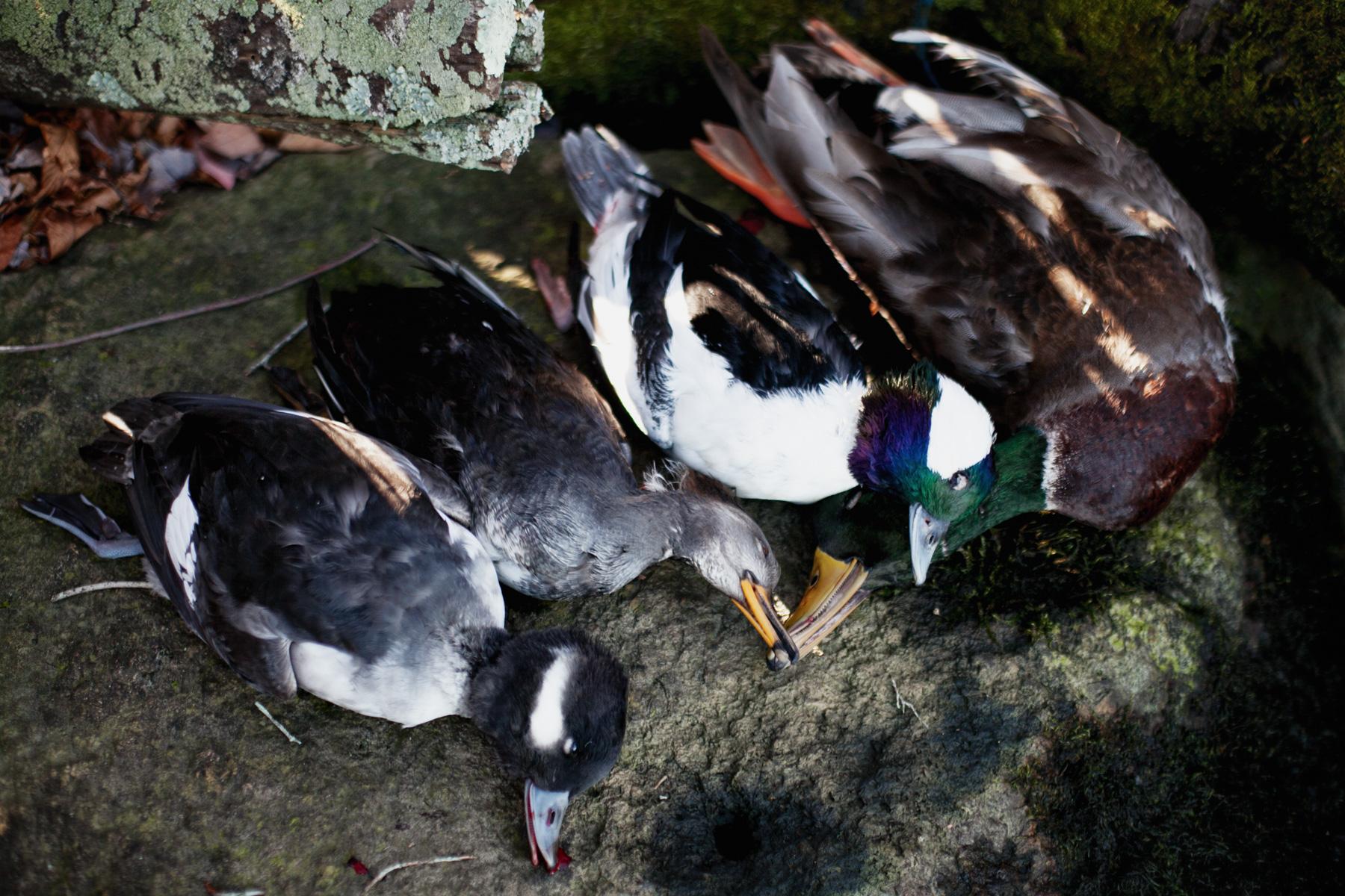 duck-hunt-dead-1.jpg