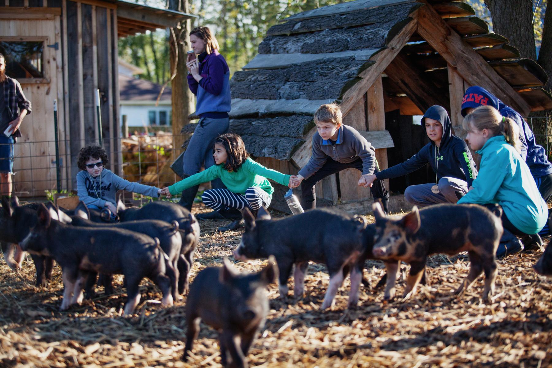 piglet-kids-farm-1.jpg