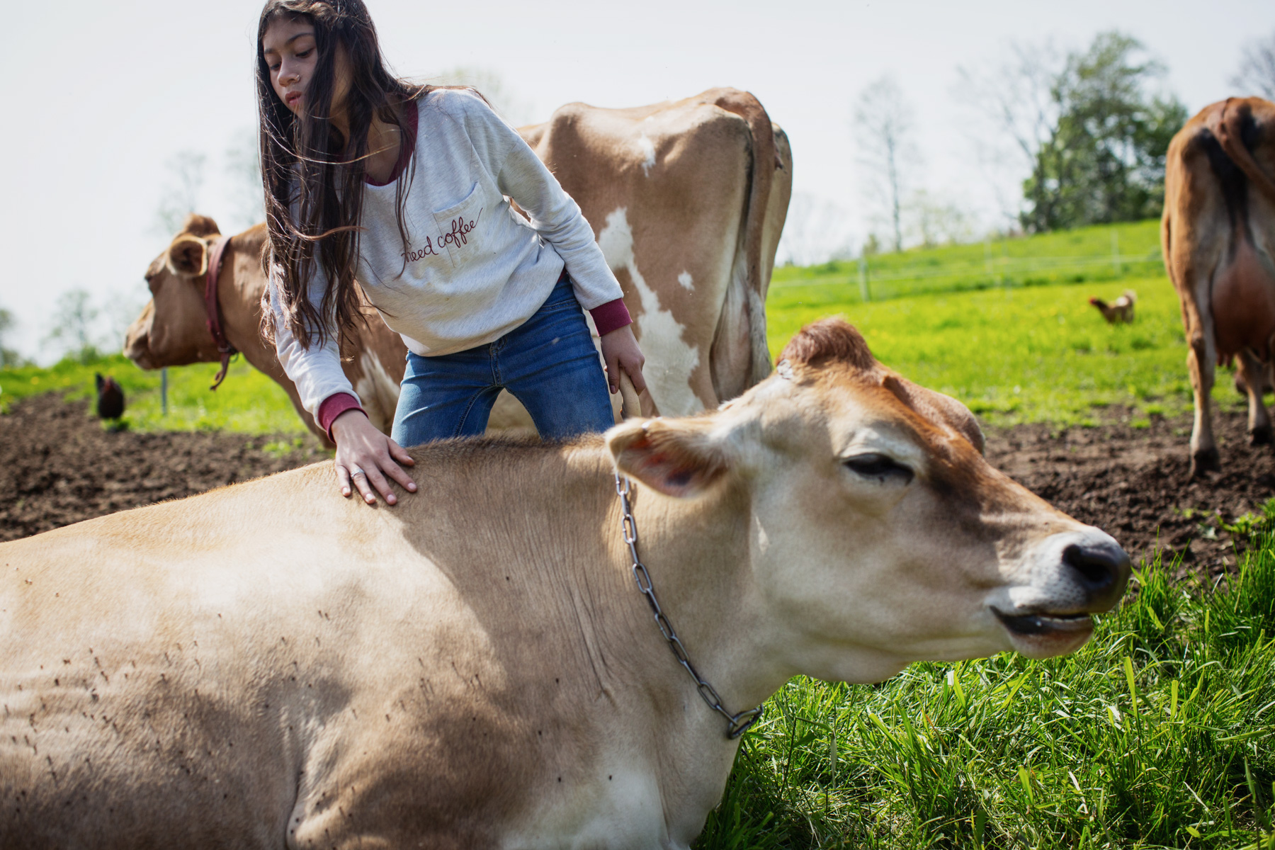 girl-pet-cow-1.jpg