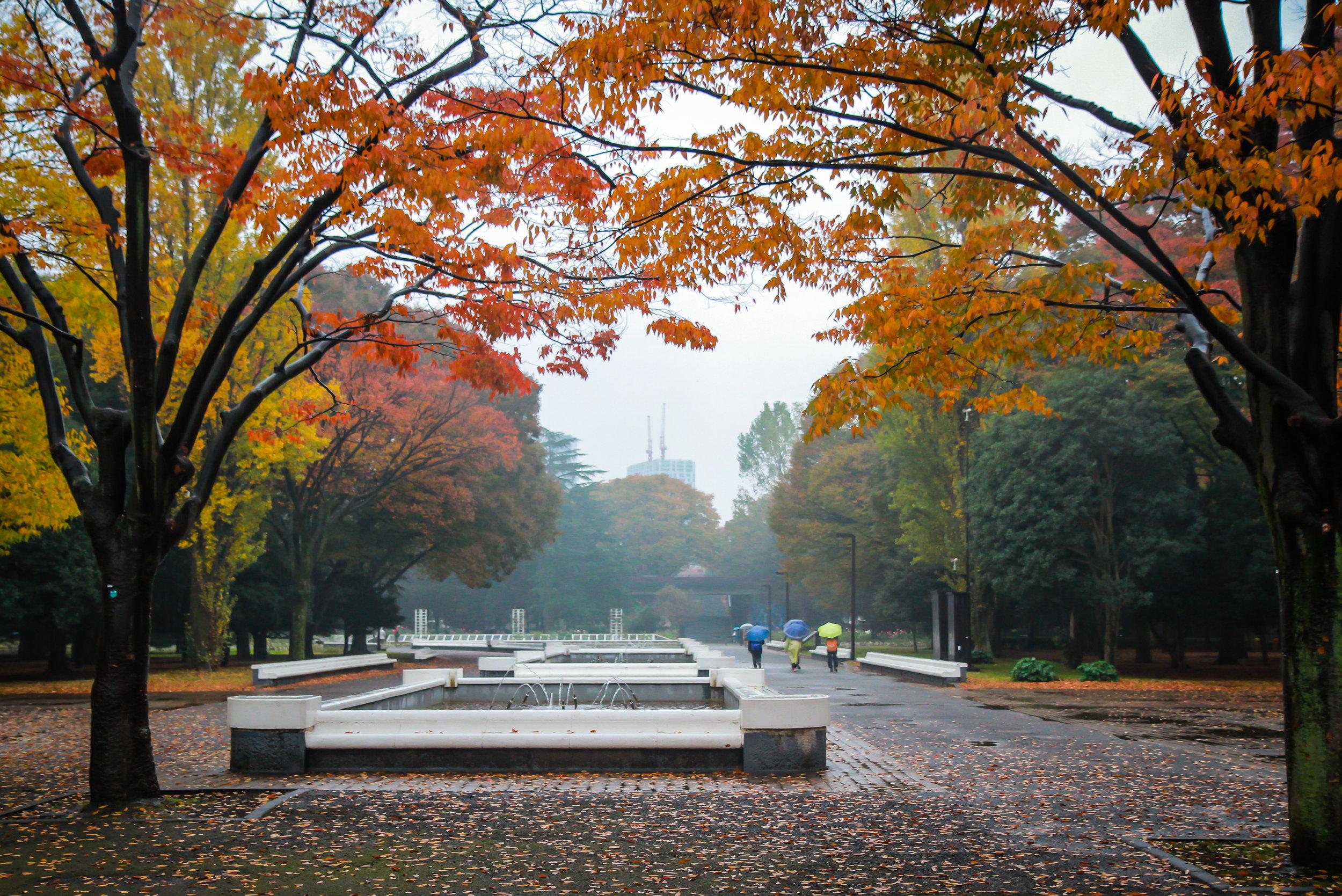 """""""Japanese Autumn"""" Yoyogi Park, Tokyo, Japan"""