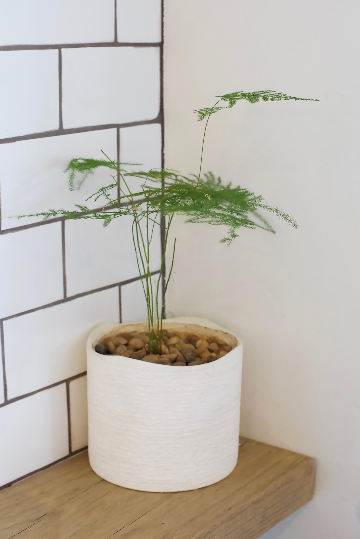 ARBOR.PLANTS?A.jpg