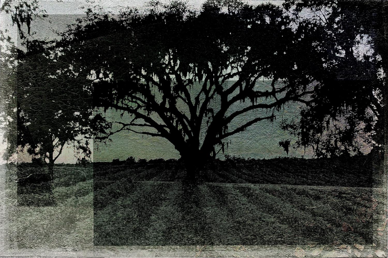 Great Oak of South Georgia