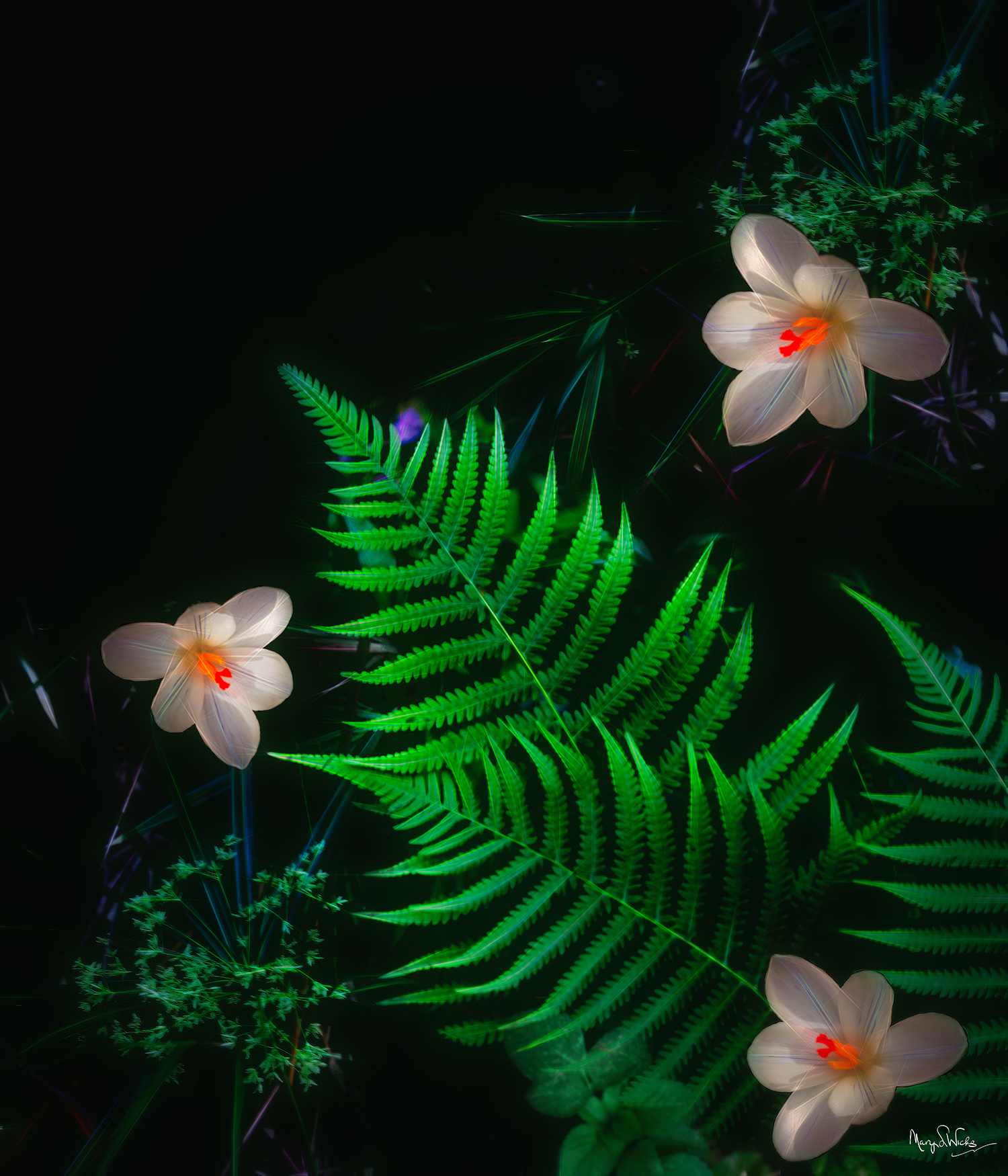 Ferns and Crocus