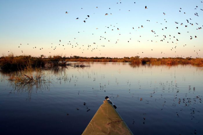 PHOTO: Wetlands and the numbers of bird that inhabit them are on the decline, scientists say. (Supplied: Kate Brandis )