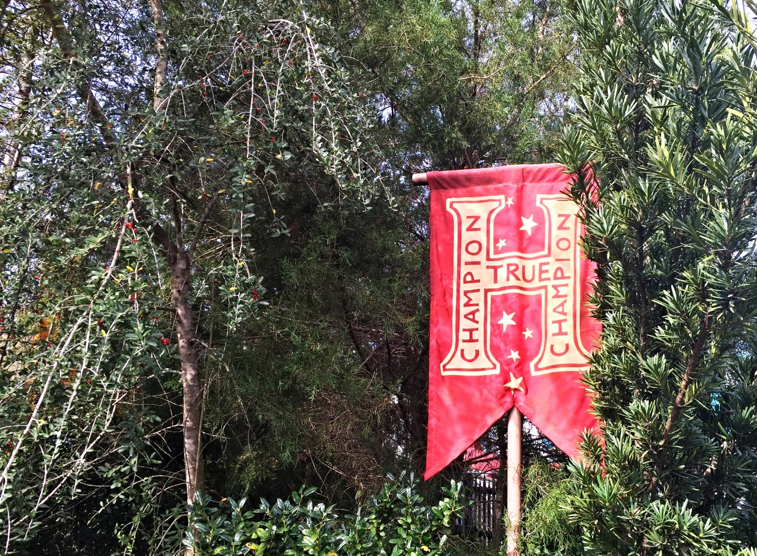 Banners All Along the Queue for Dragon Challenge