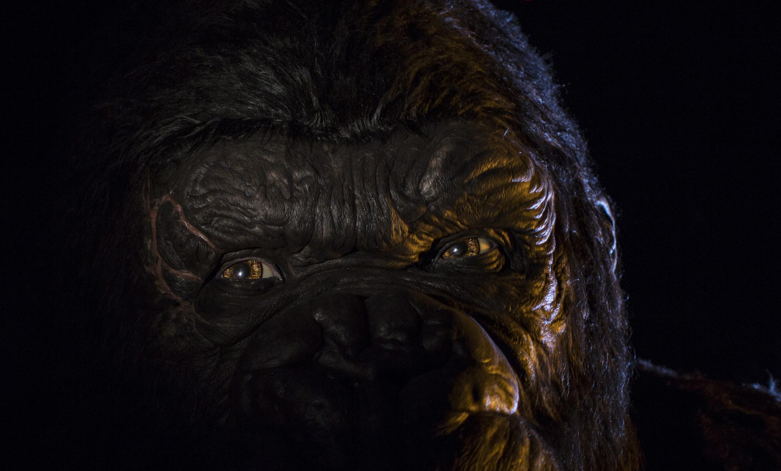 Kong Close-Up