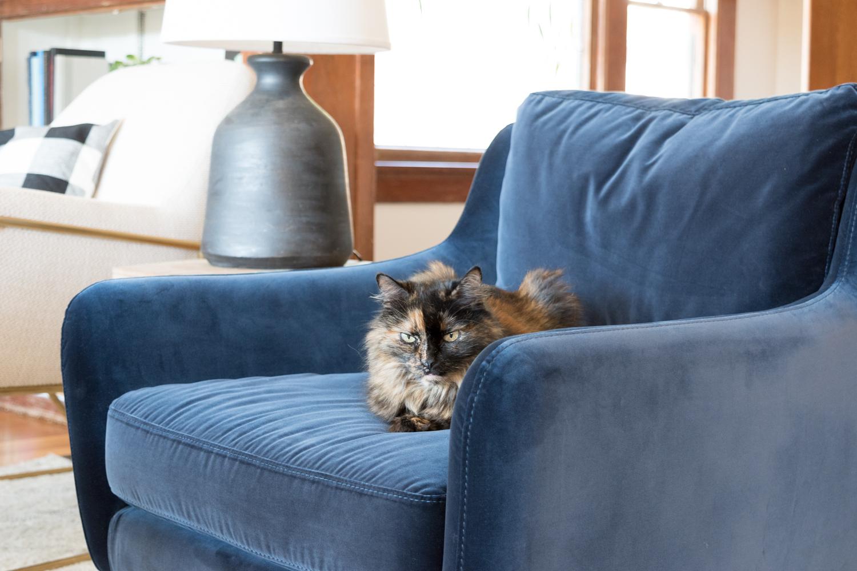 Blue velvet Matrix chair from Article