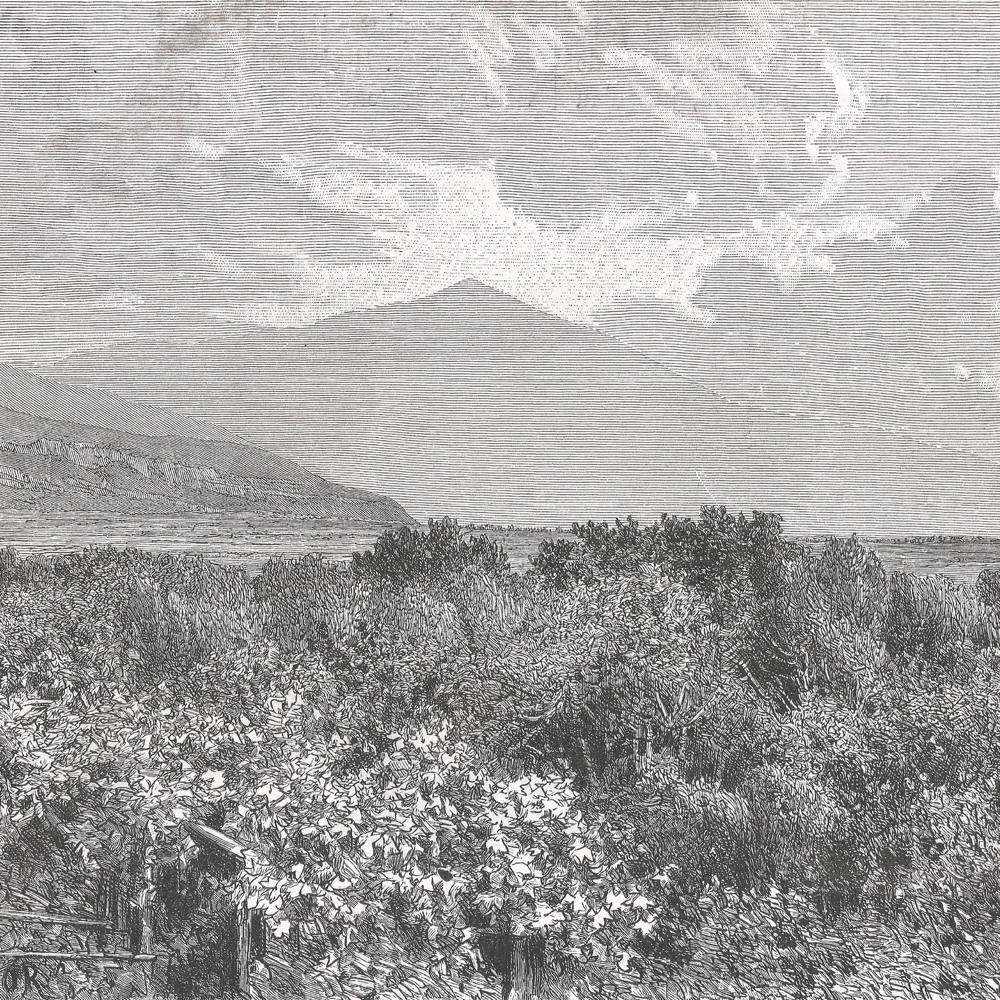 Gardens of Souedyeh, Syria 1889 - Old Antique Vintage Engraving Art Print - Flowers, Shurbs, Grass, Foliage, Fauna, Desert, Hills