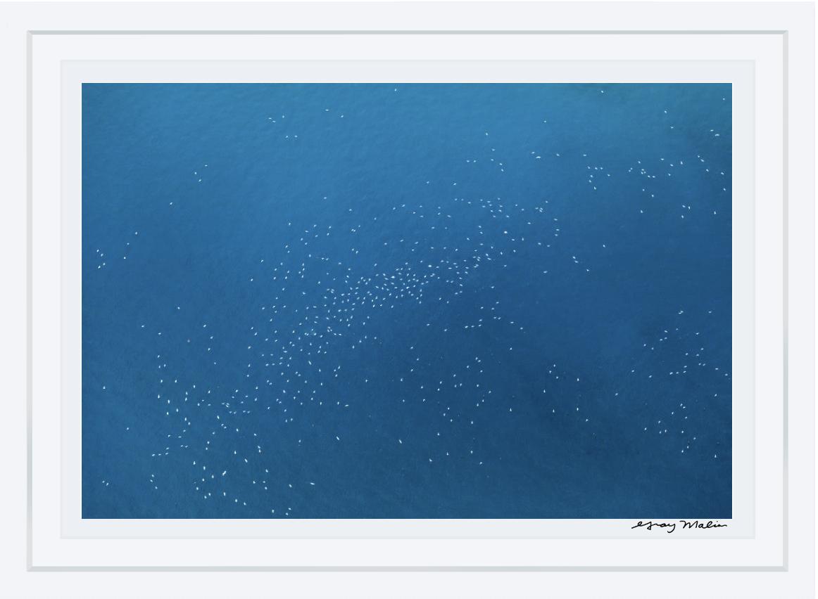 Seabirds, Great Barrier Reef À la Plage Gray Malin
