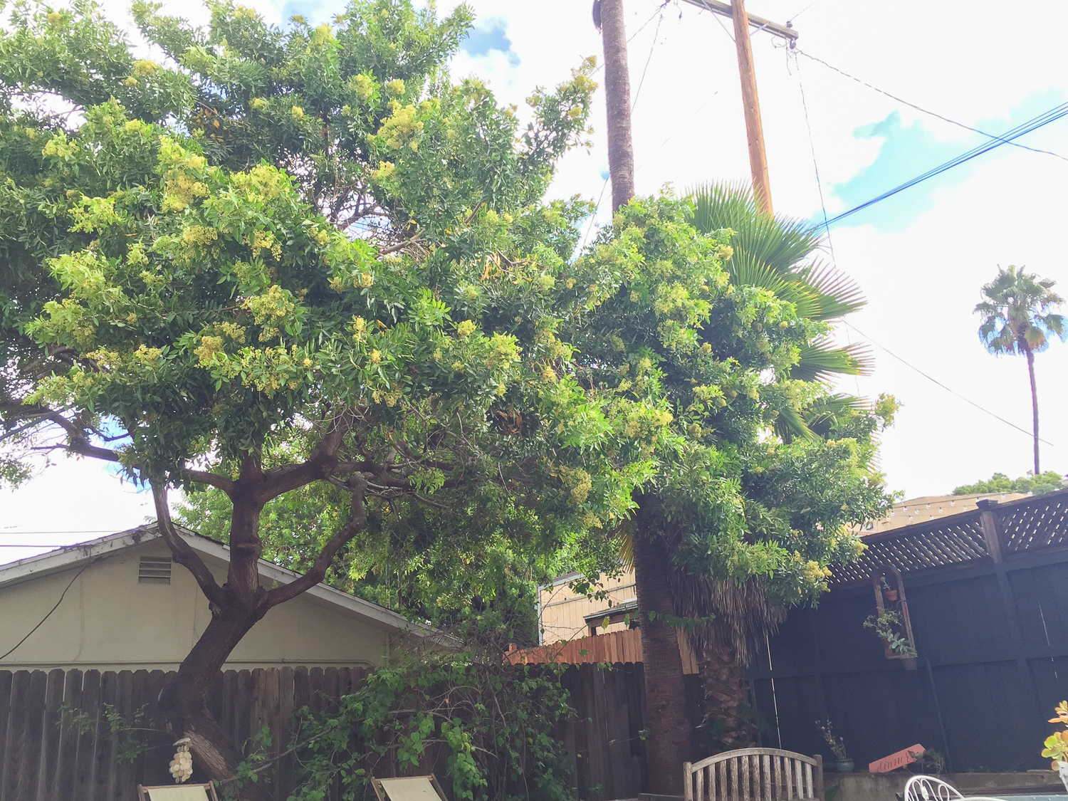 Getting the Utility Company to Take Care of our Tree Service-2565.jpg