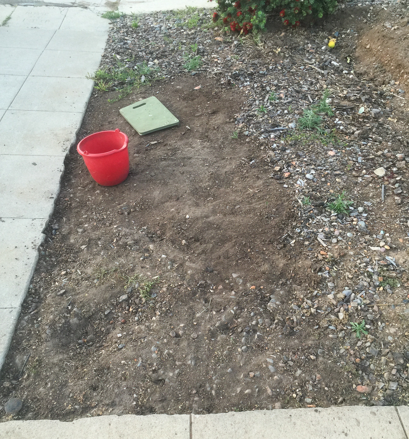 How We cleared Our Yard for Free-7484.jpg