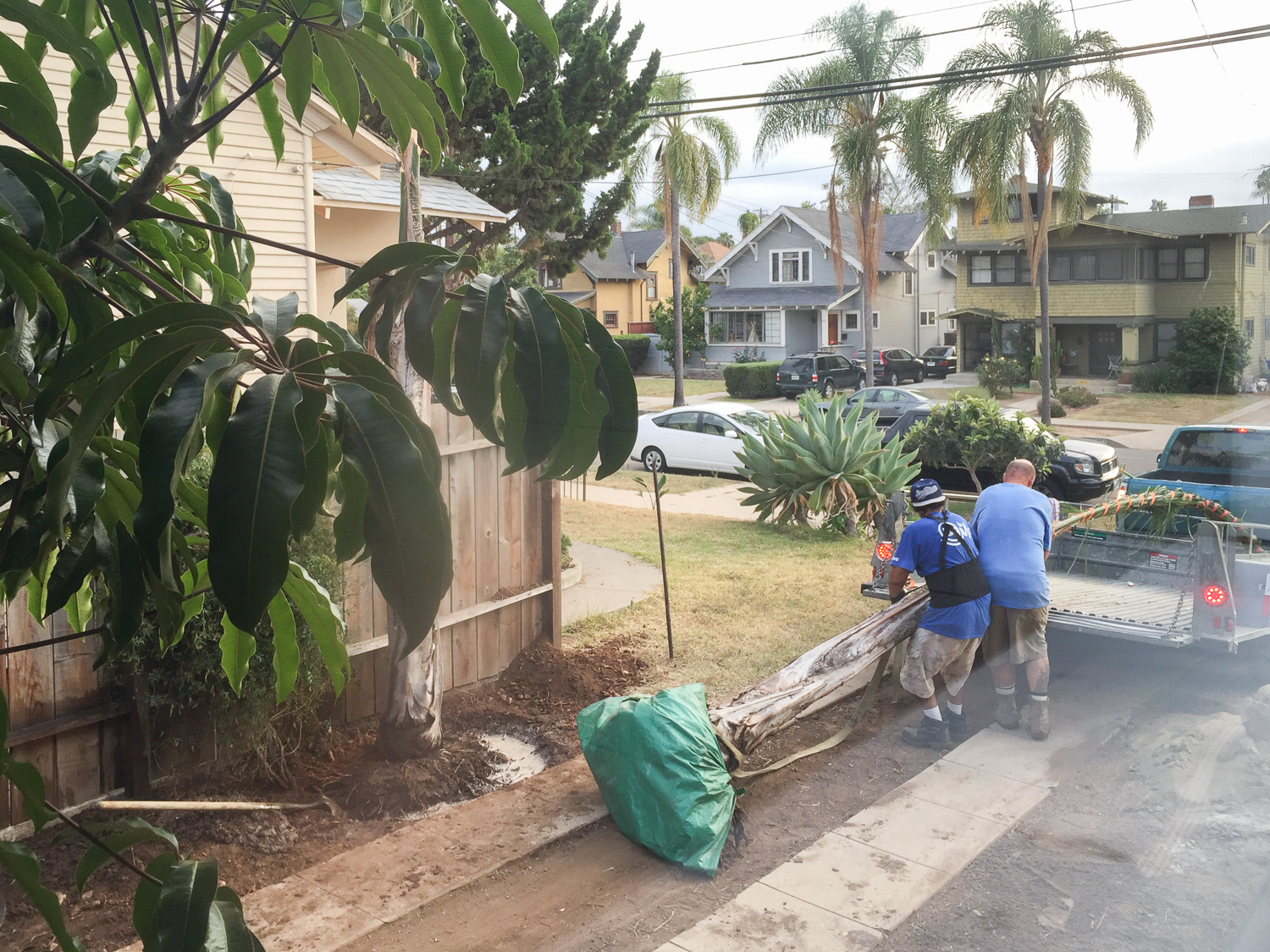 How We cleared Our Yard for Free--8593.jpg