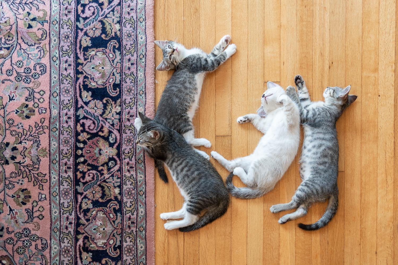 fostering kittens-0381.jpg