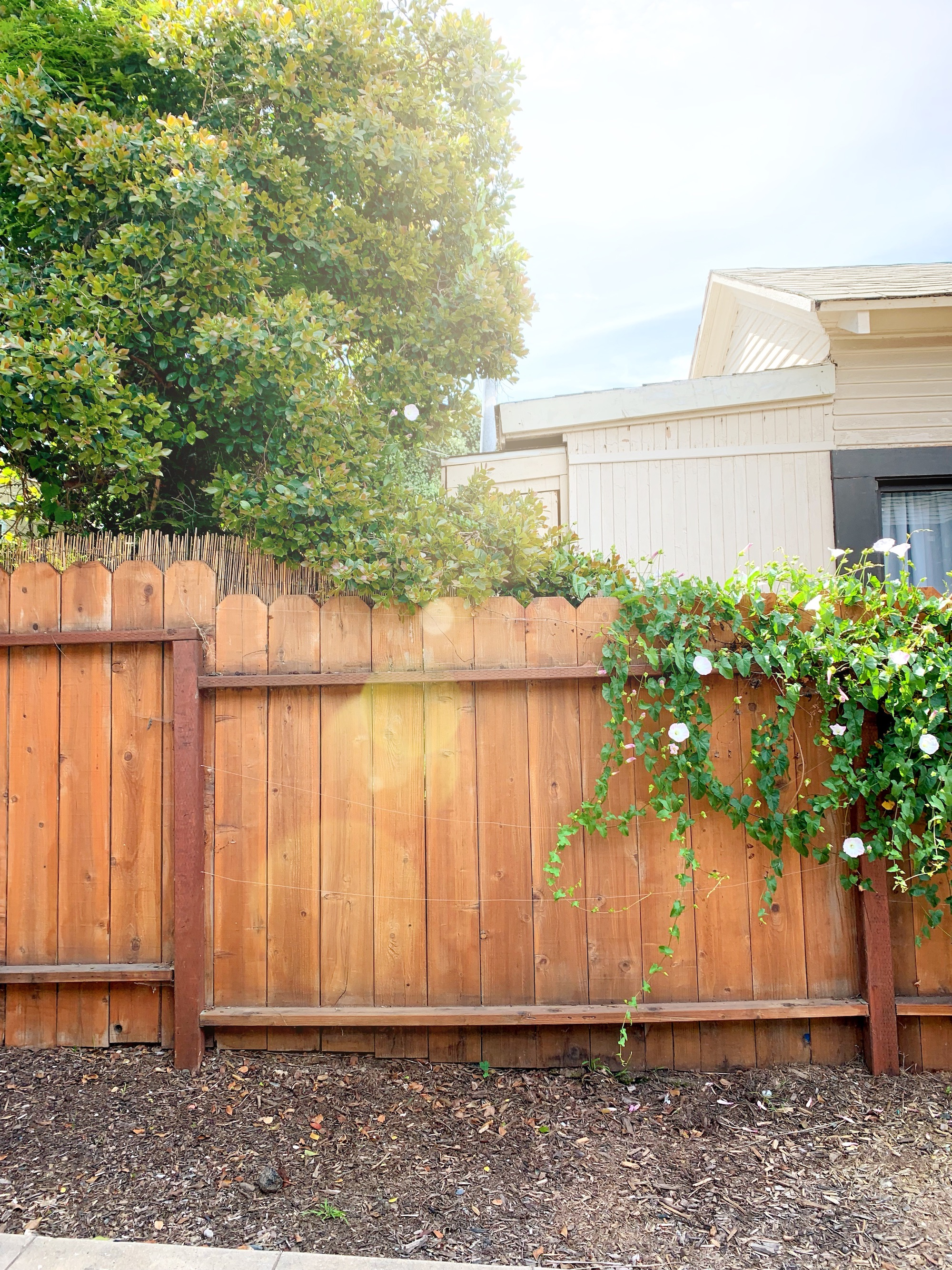 The Gold Hive How To Refresh A Fence