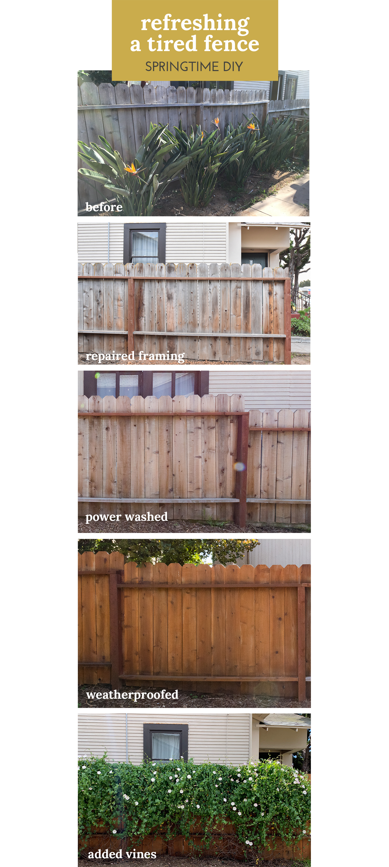 The Gold Hive How to Refresh a Fence - SPRINGTIME DIY REFRESHING A TIRED FENCE.jpg