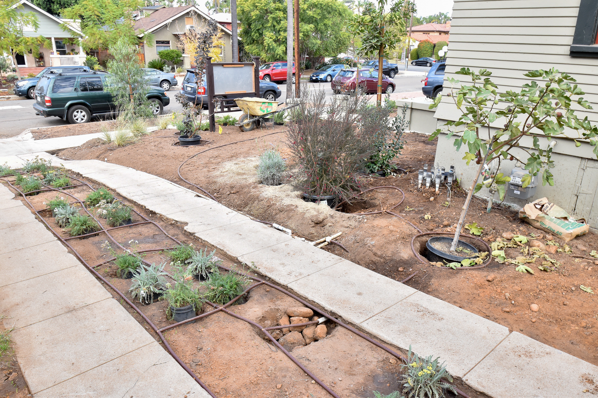 Installing the Drought Tolerant Garden Front Yard The Gold Hive-9966.jpg