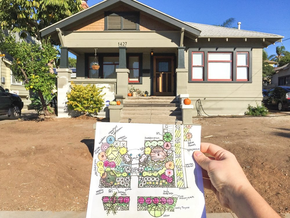 The Plant Guide For Our Southern California Low Water Front Yard