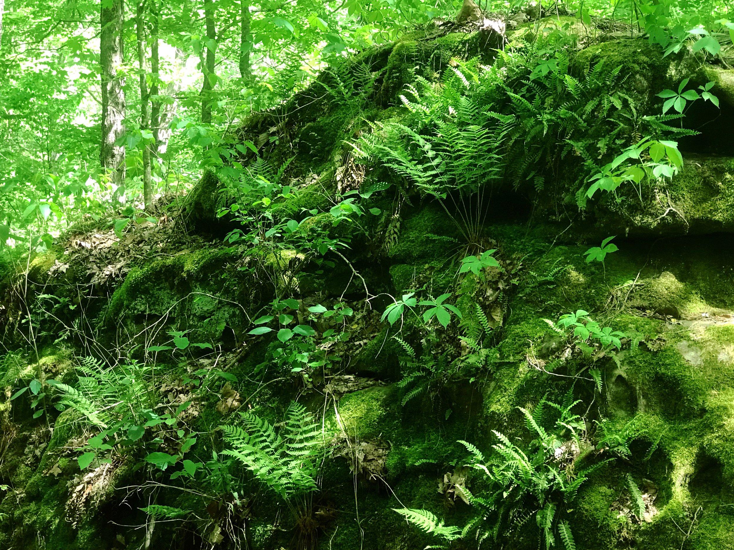 fern-clyffe-waterfall-17.JPG