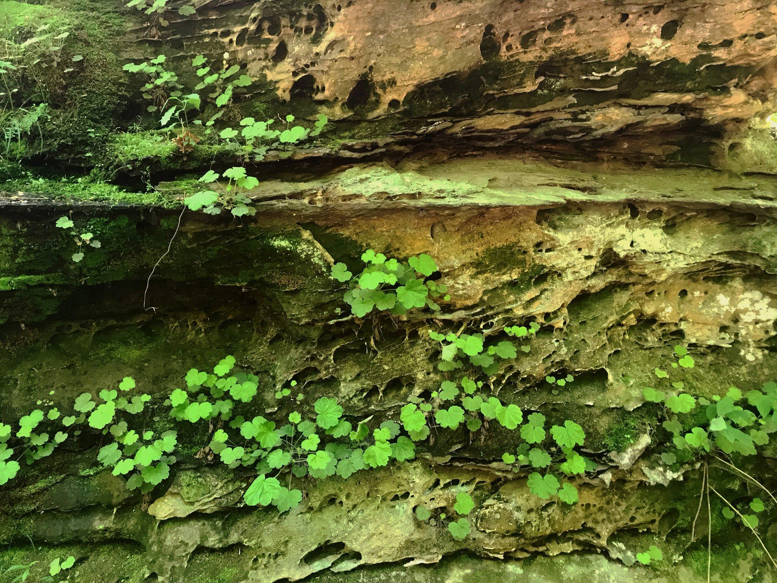 fern-clyffe-waterfall-15.JPG