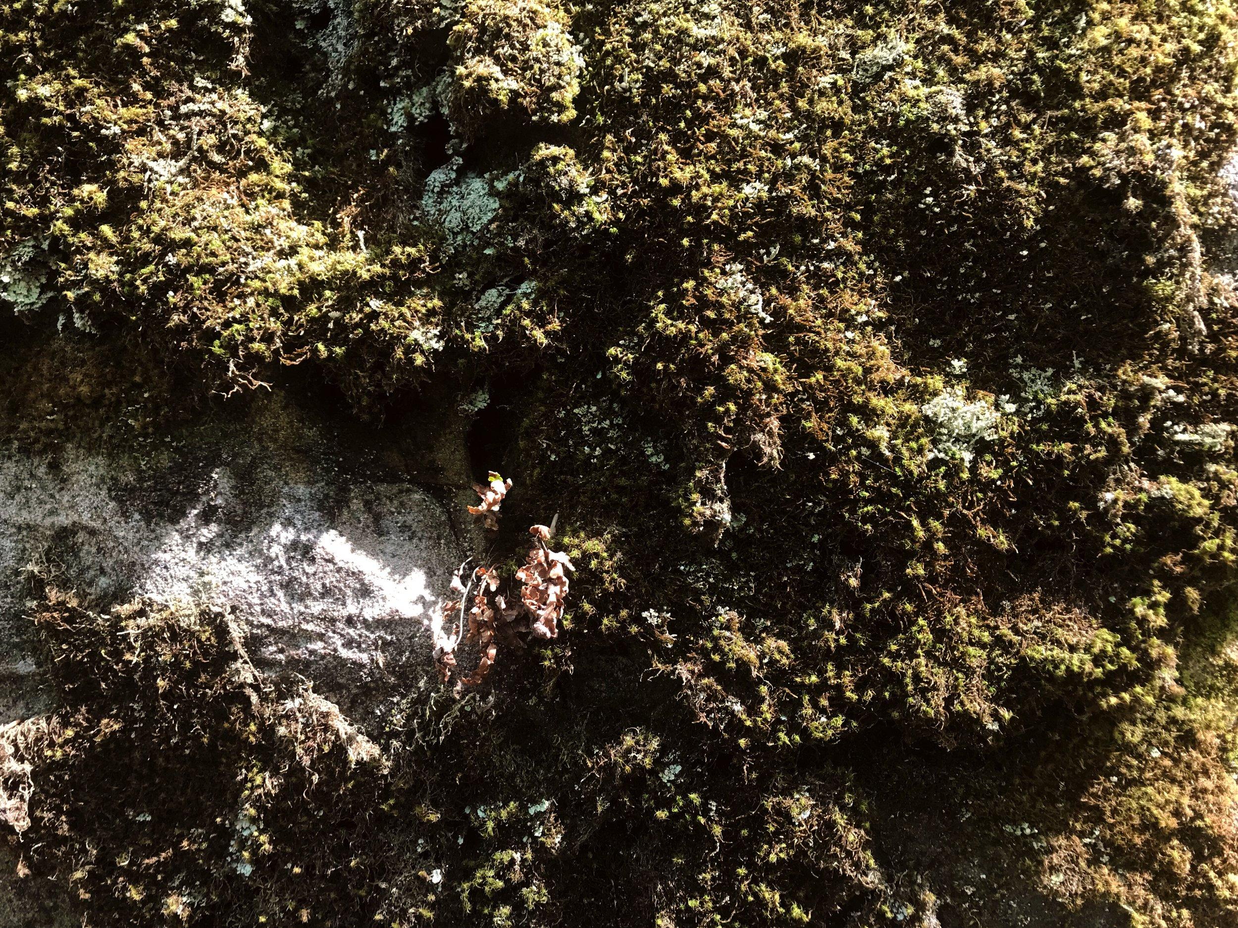 fern-clyffe-waterfall-12.JPG