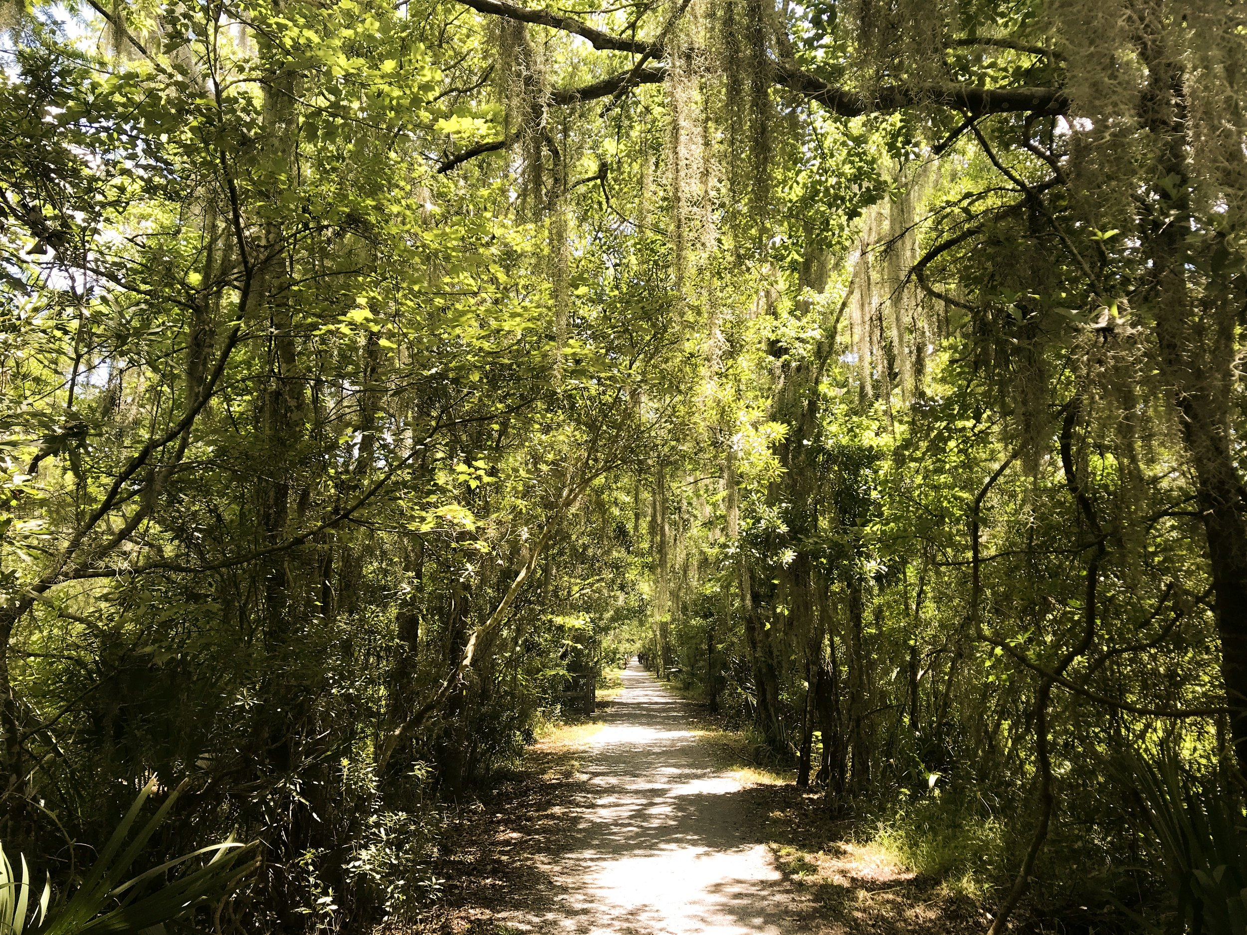 jean-lafitte-national-park5110.jpg