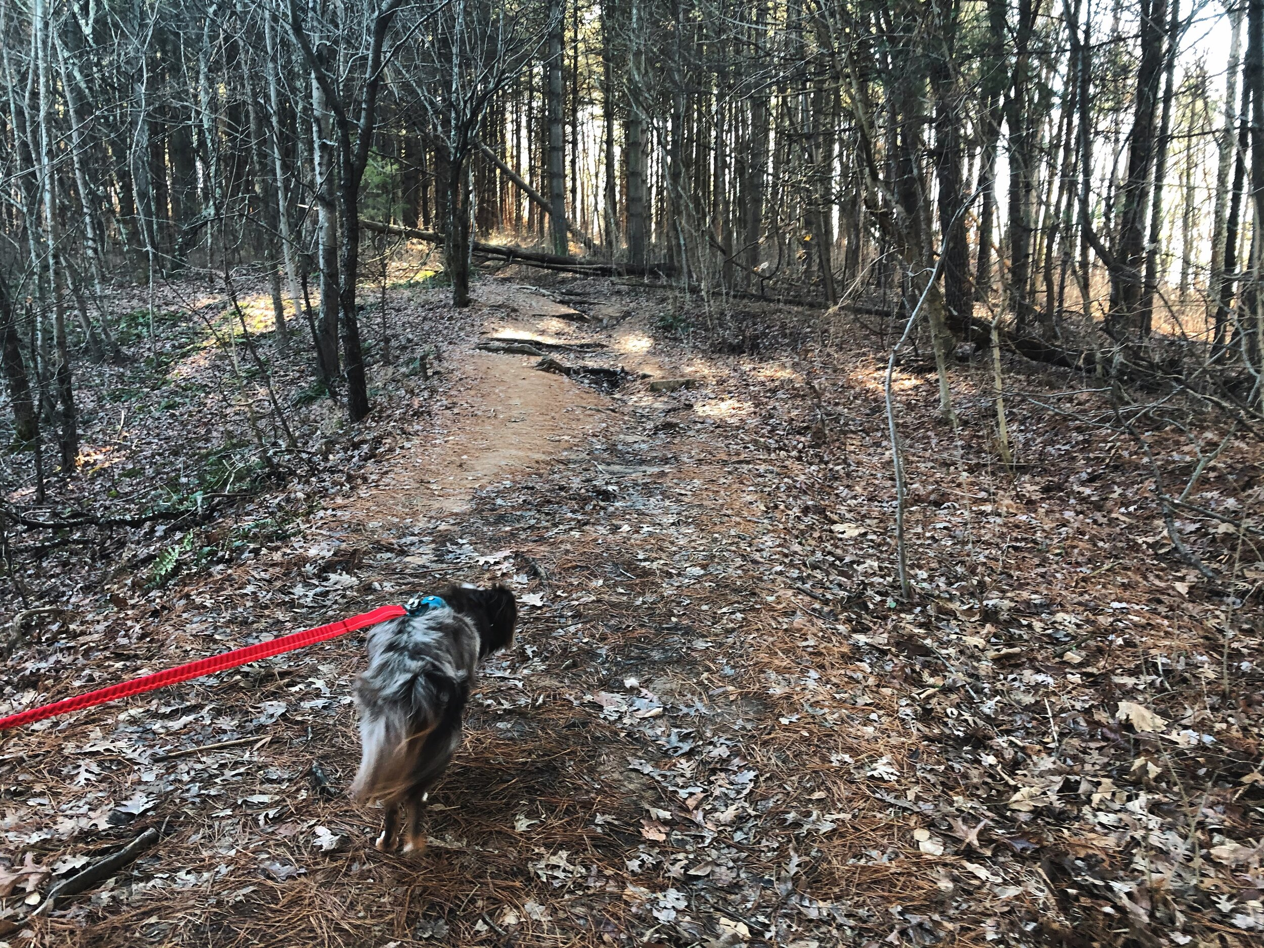 indian-point-trail-shawnee-illinois0508.JPG