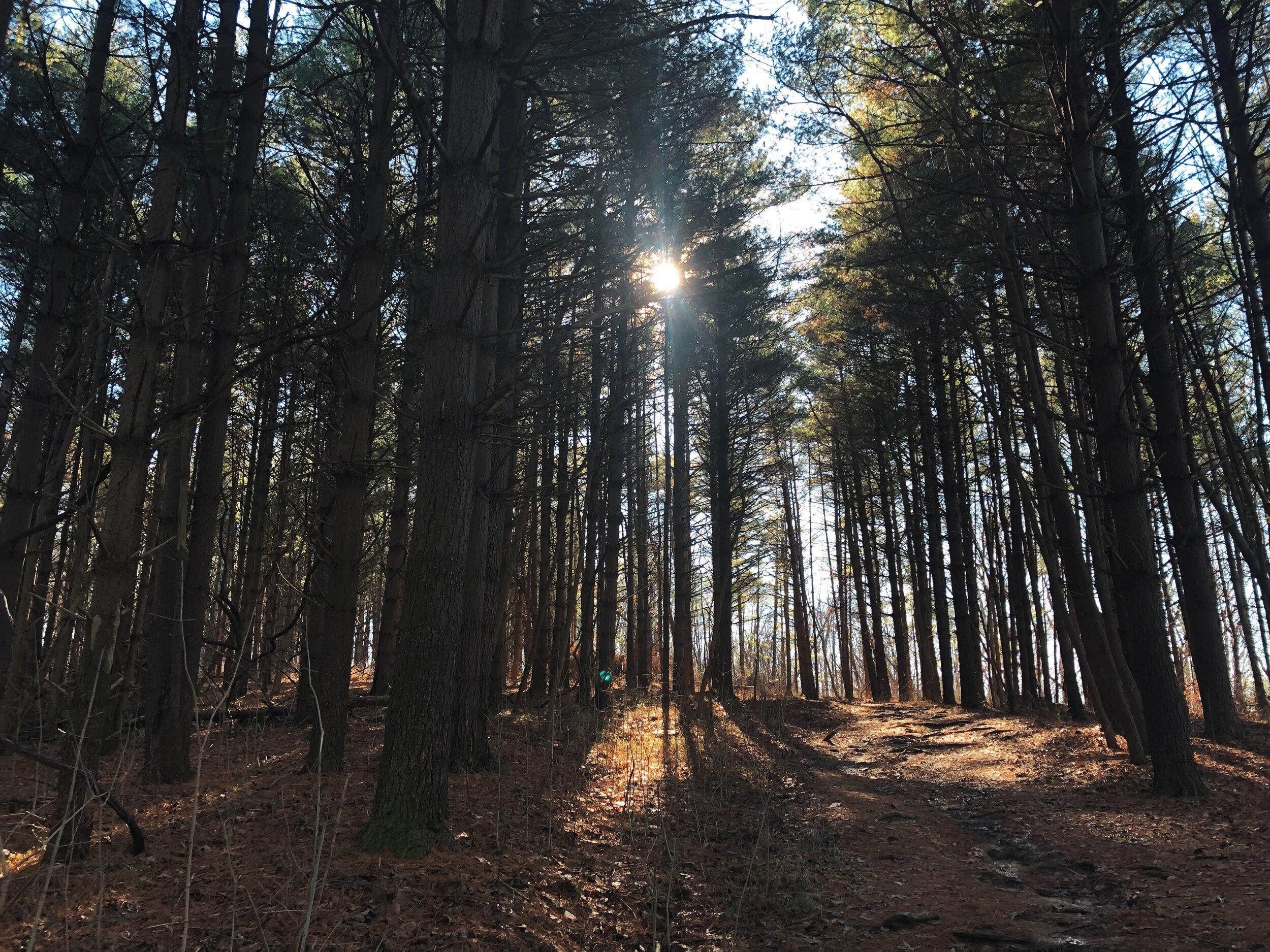 indian-point-trail-shawnee-illinois0509.JPG