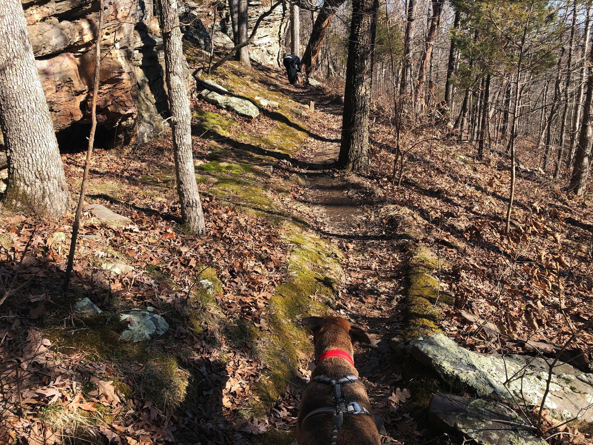 indian-point-trail-shawnee-illinois0514.JPG