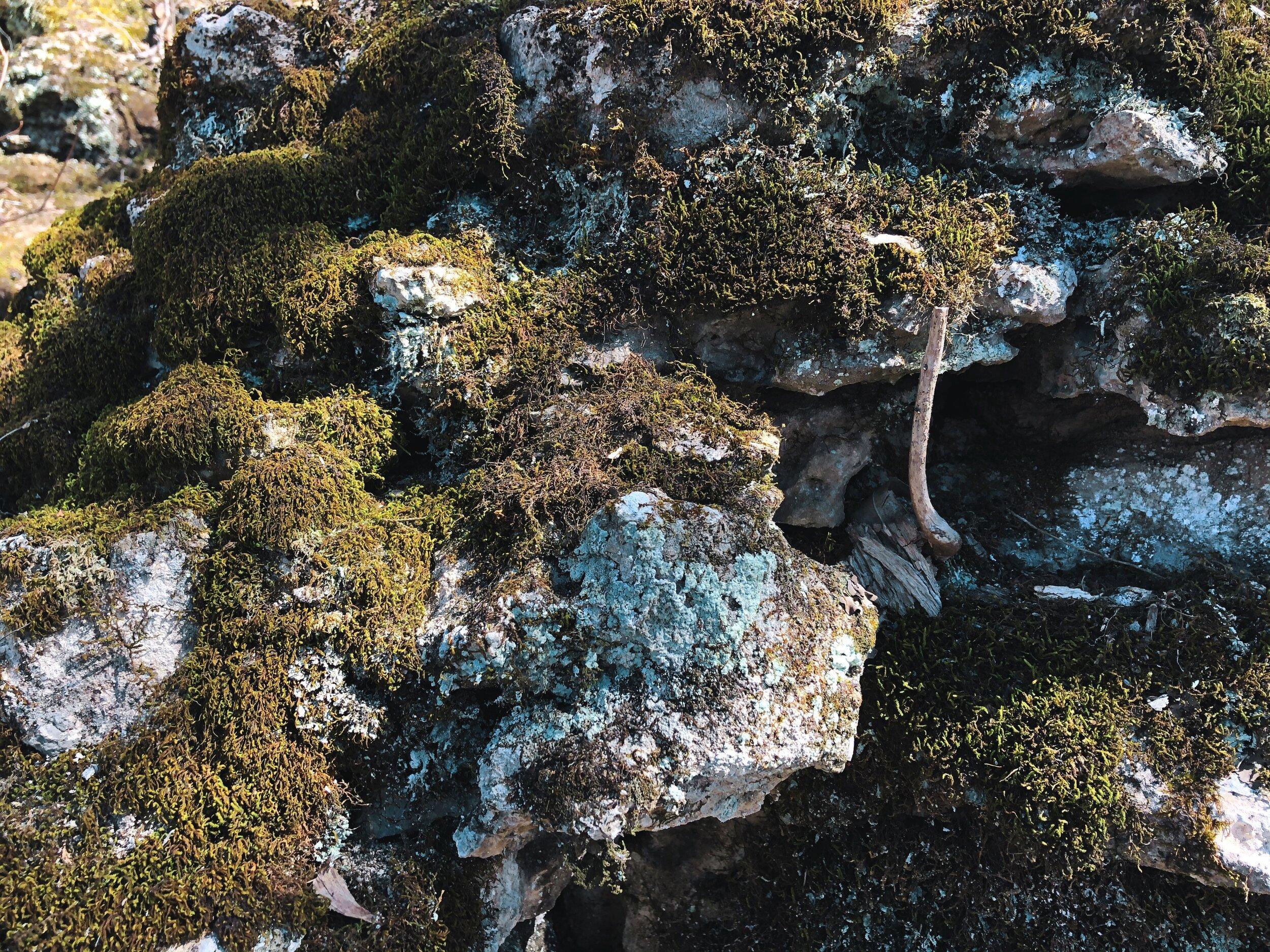 rockswoods-reservation-wildwood-missouri0538.JPG