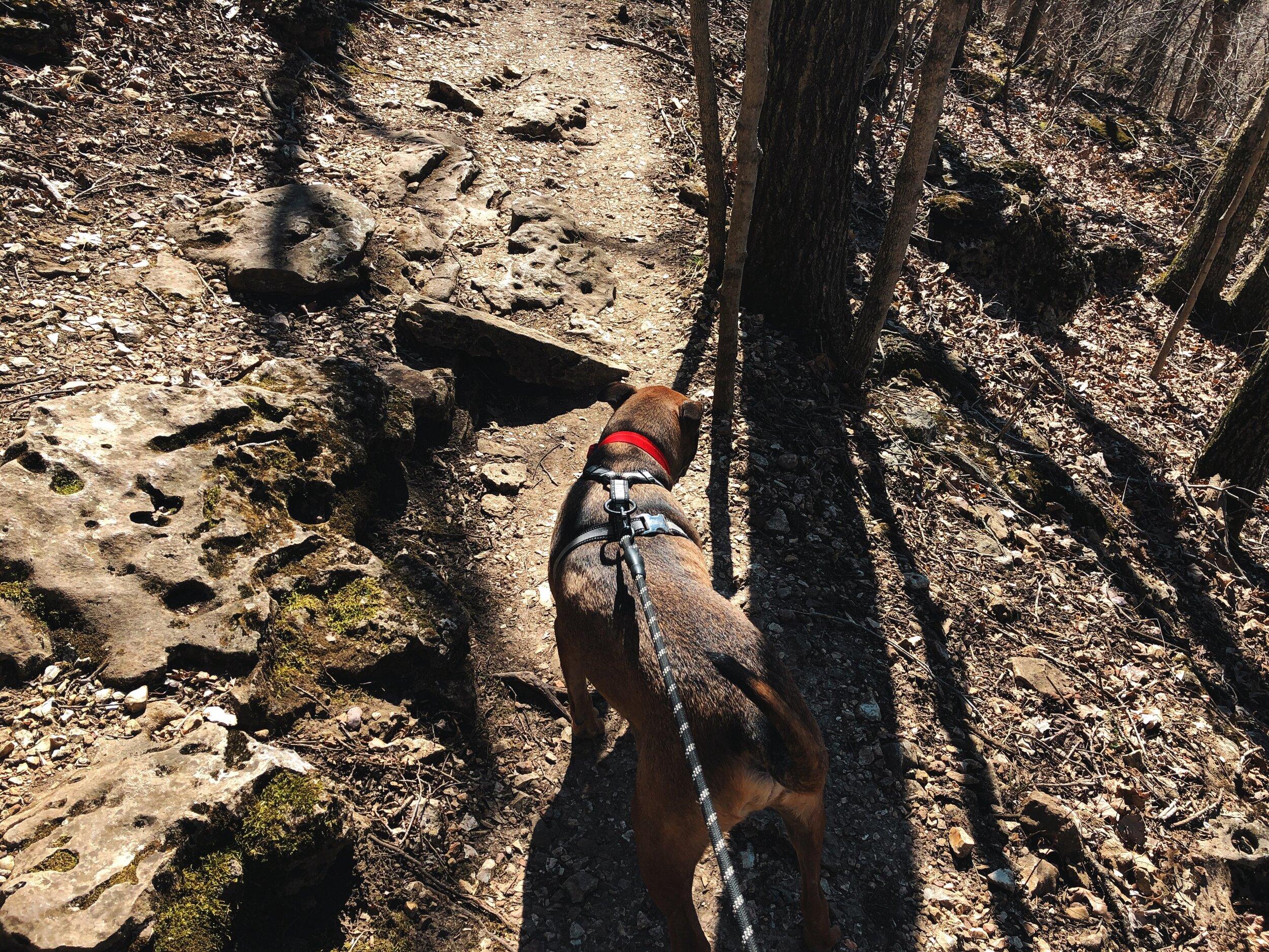 rockswoods-reservation-wildwood-missouri0540.JPG