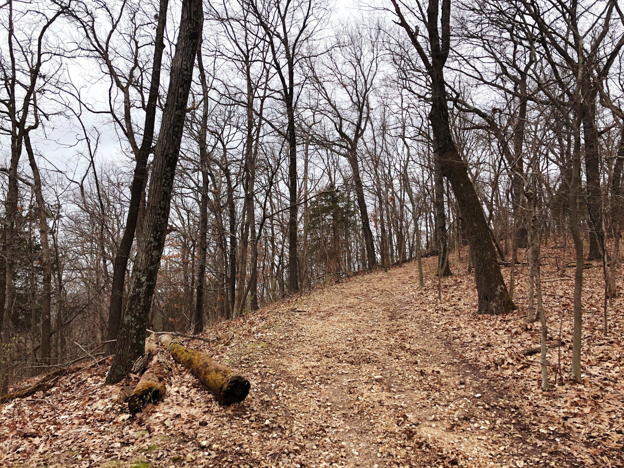 mastadon-state-park-limestone-hill trail0553.JPG