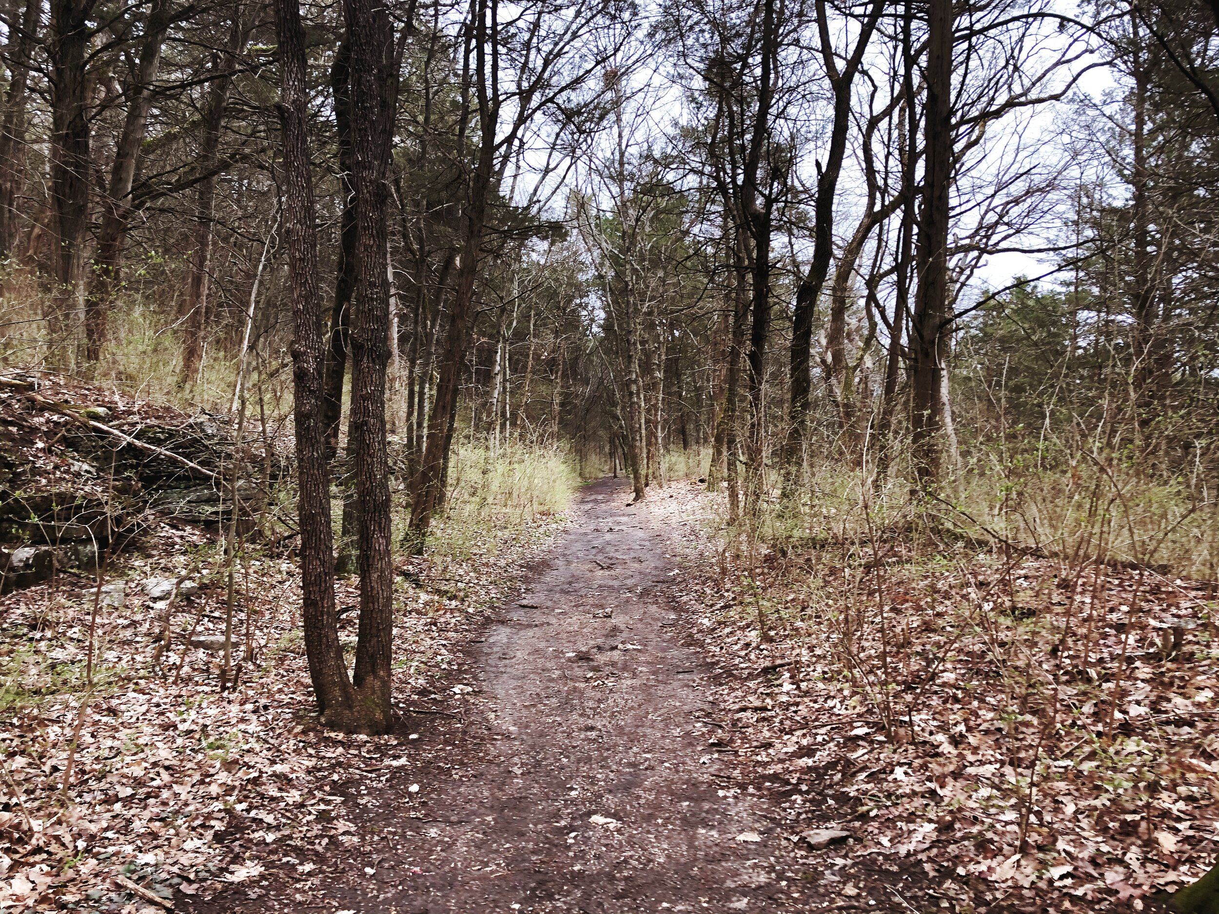 mastadon-state-park-limestone-hill trail0546.JPG