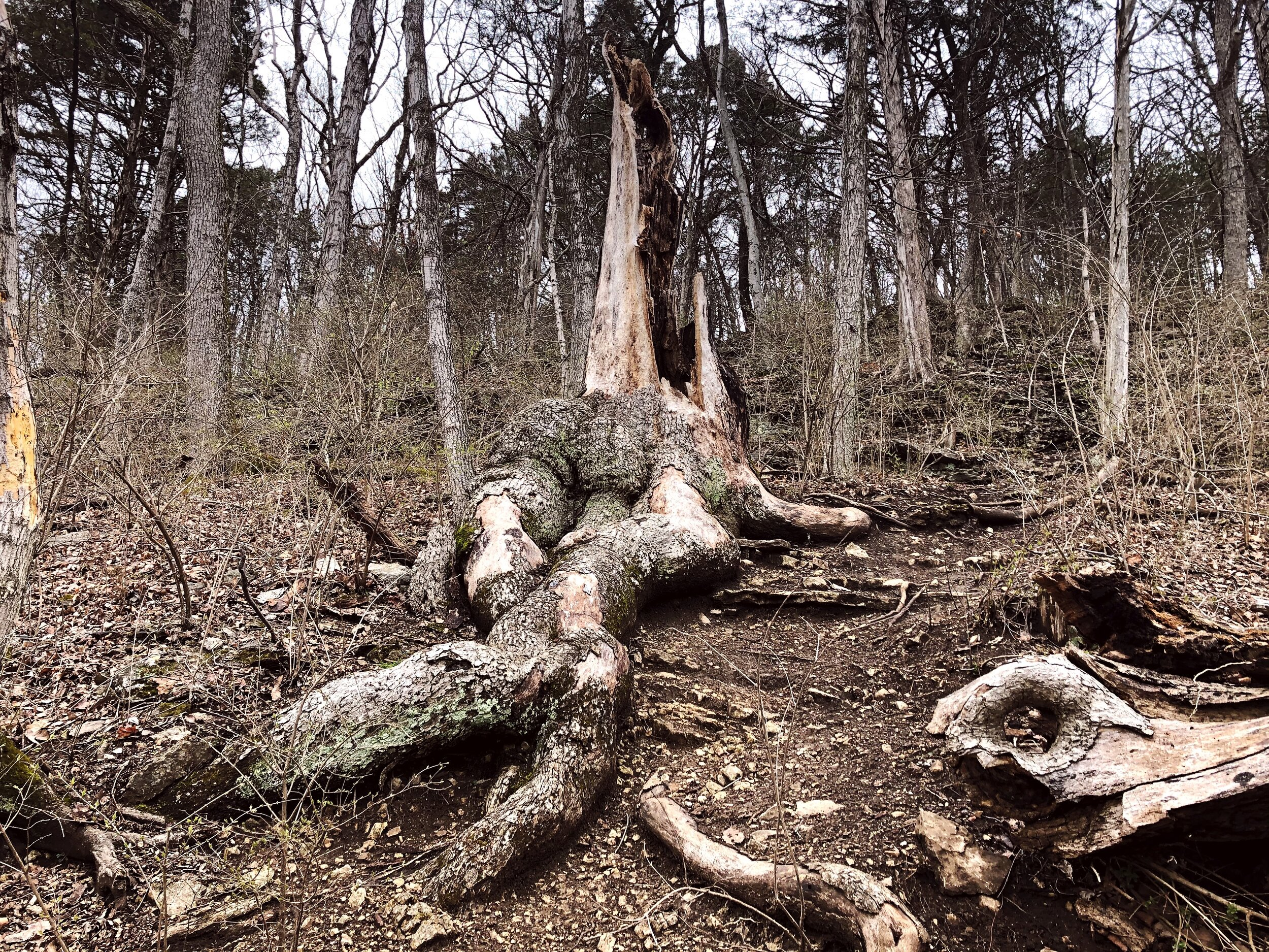 mastadon-state-park-limestone-hill trail0542.JPG