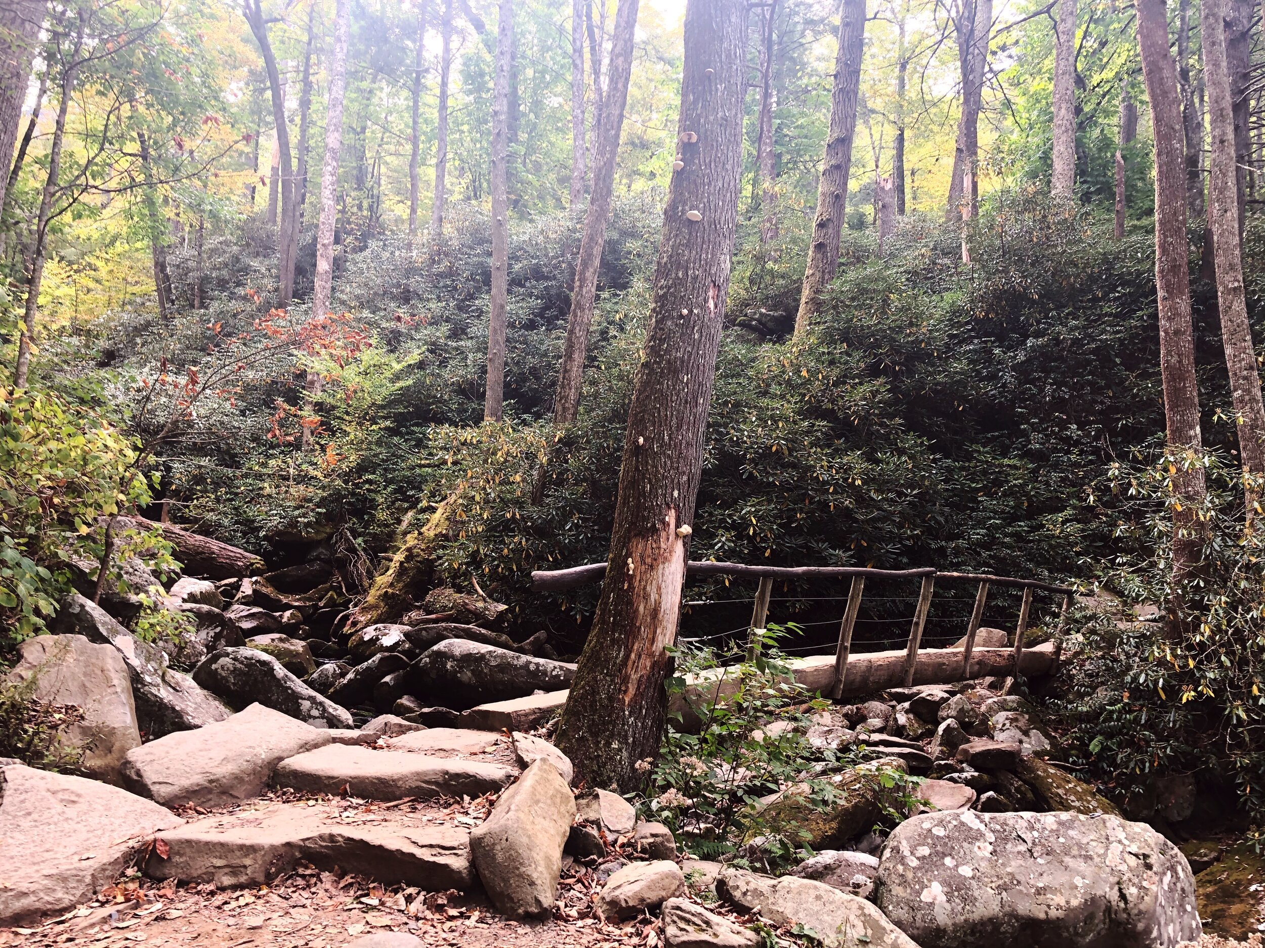 mount-leconte-rainbow falls trail-great-smoky-mountains-gatlinberg-tennessee0432.JPG