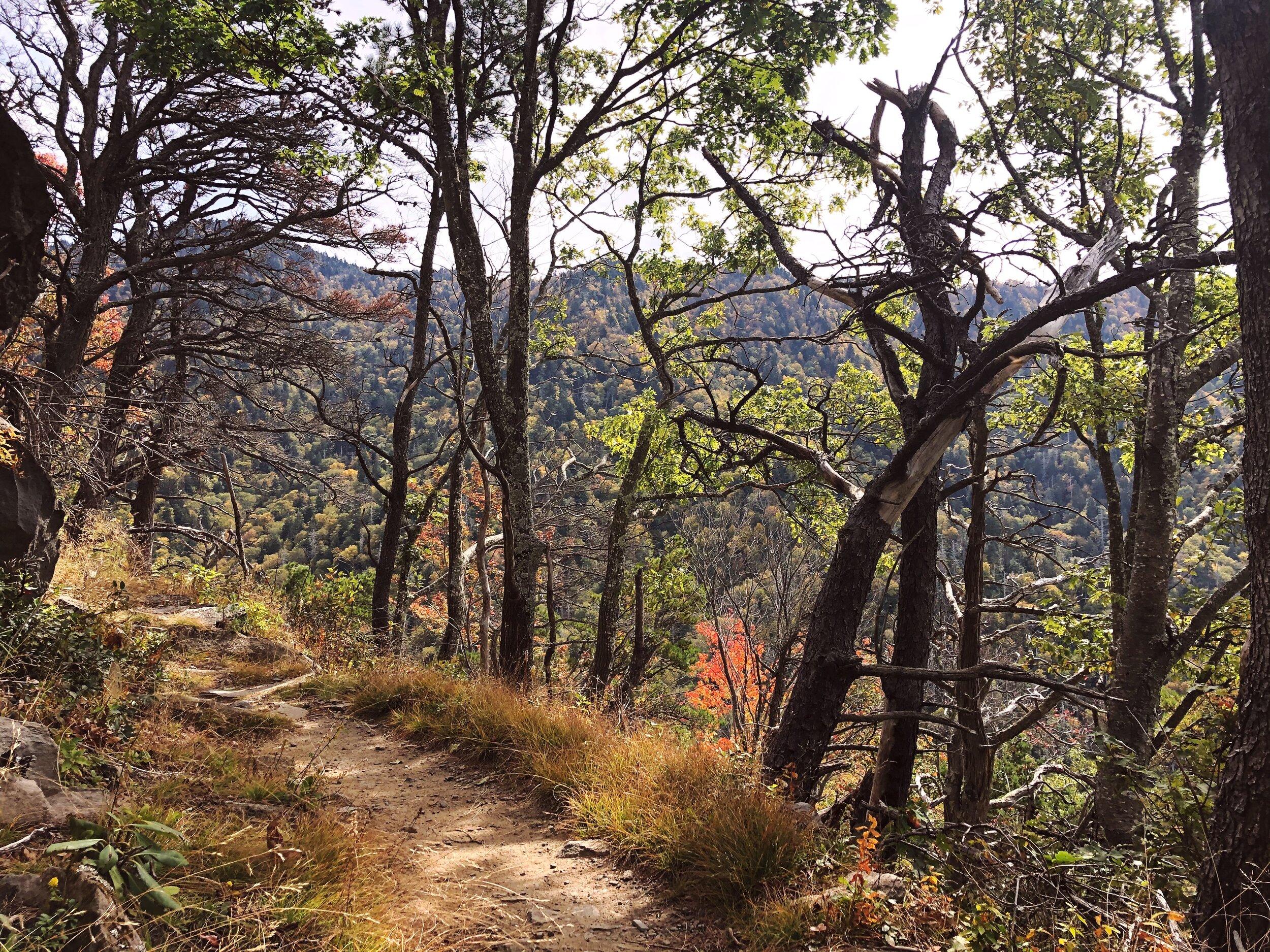 mount-leconte-rainbow falls trail-great-smoky-mountains-gatlinberg-tennessee0442.JPG