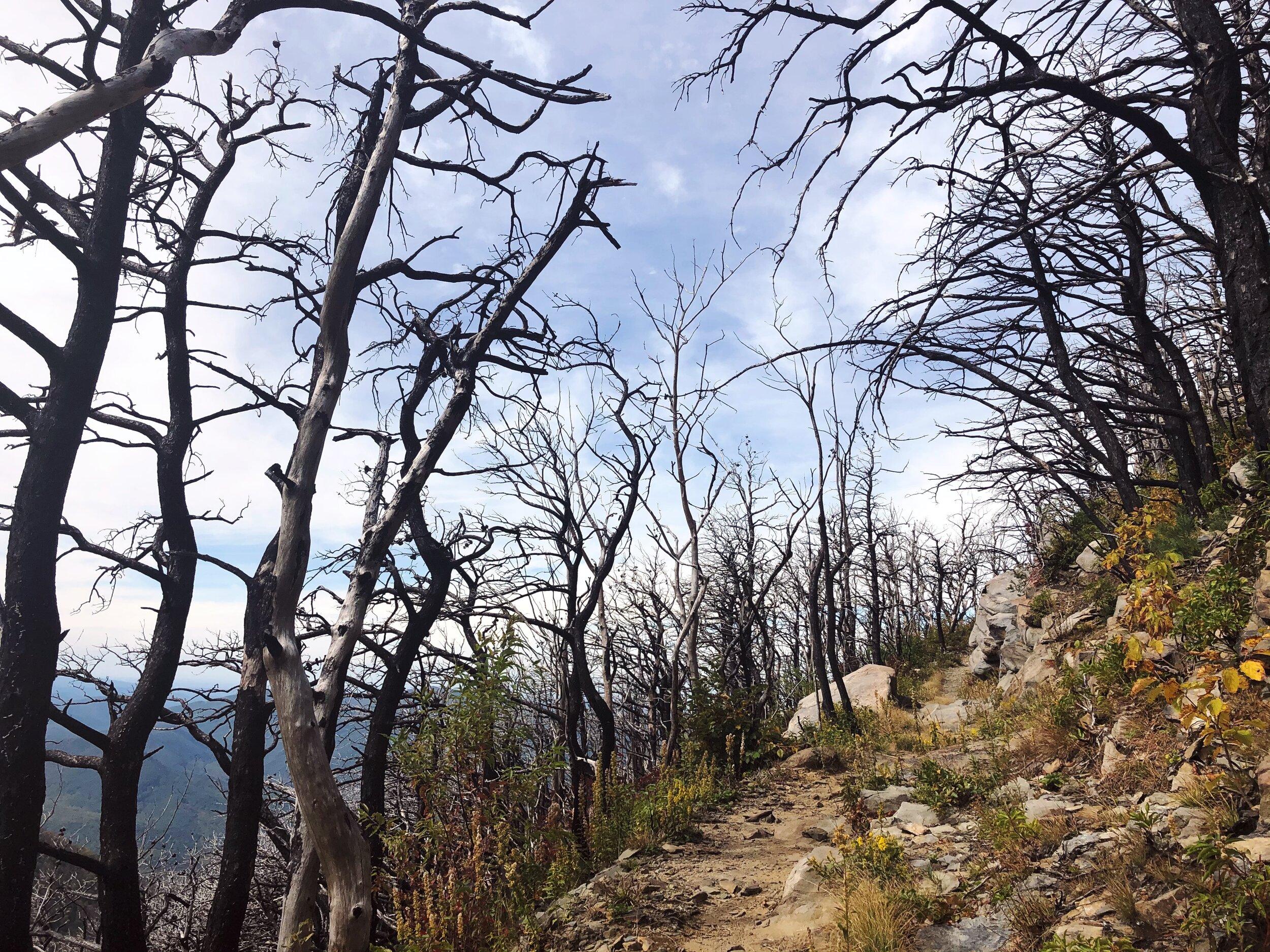 mount-leconte-rainbow falls trail-great-smoky-mountains-gatlinberg-tennessee0445.JPG