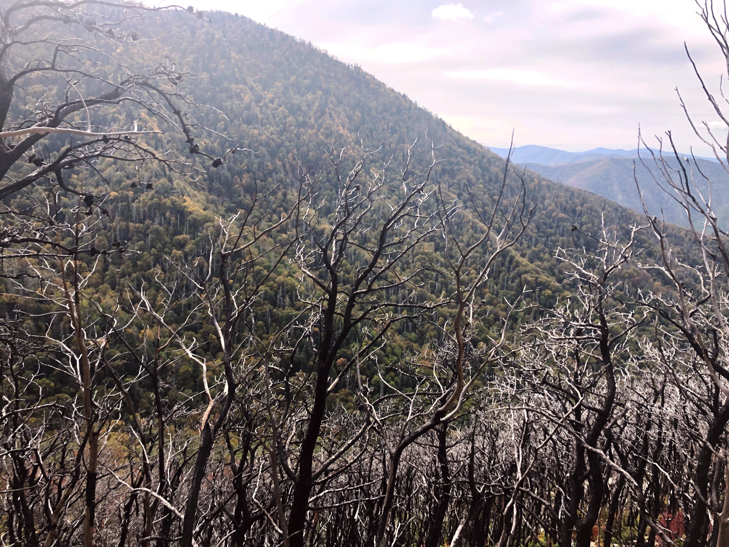 mount-leconte-rainbow falls trail-great-smoky-mountains-gatlinberg-tennessee0446.JPG