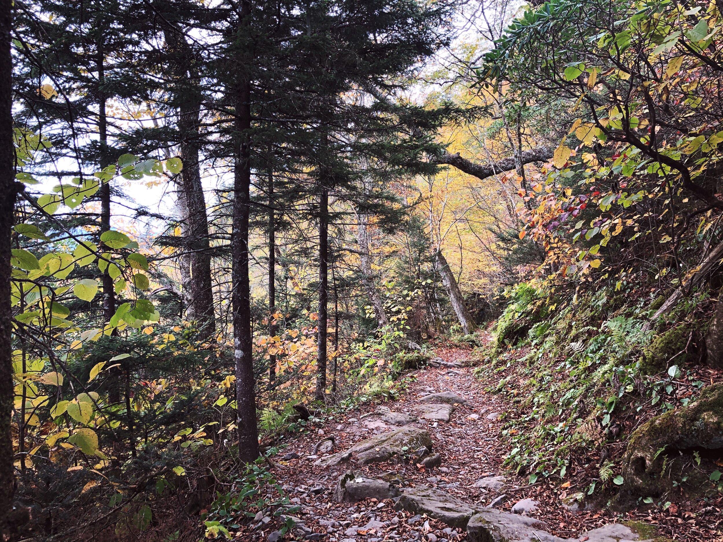 mount-leconte-rainbow falls trail-great-smoky-mountains-gatlinberg-tennessee0447.JPG