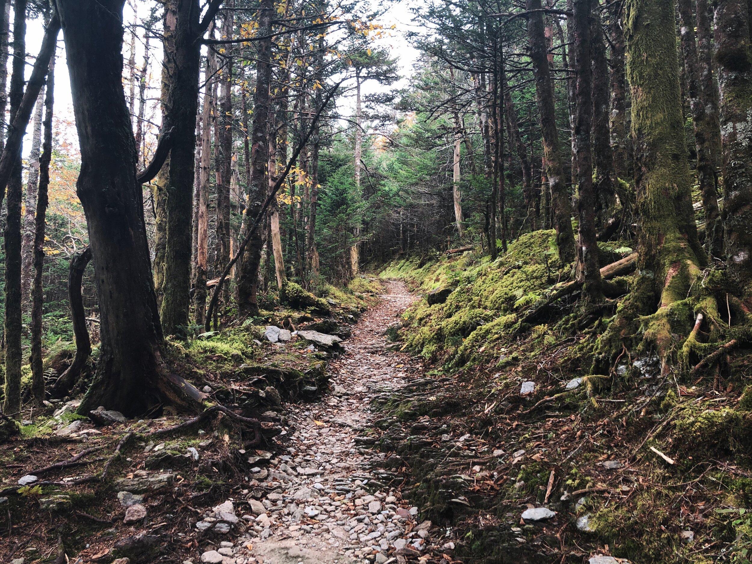 mount-leconte-rainbow falls trail-great-smoky-mountains-gatlinberg-tennessee0449.JPG
