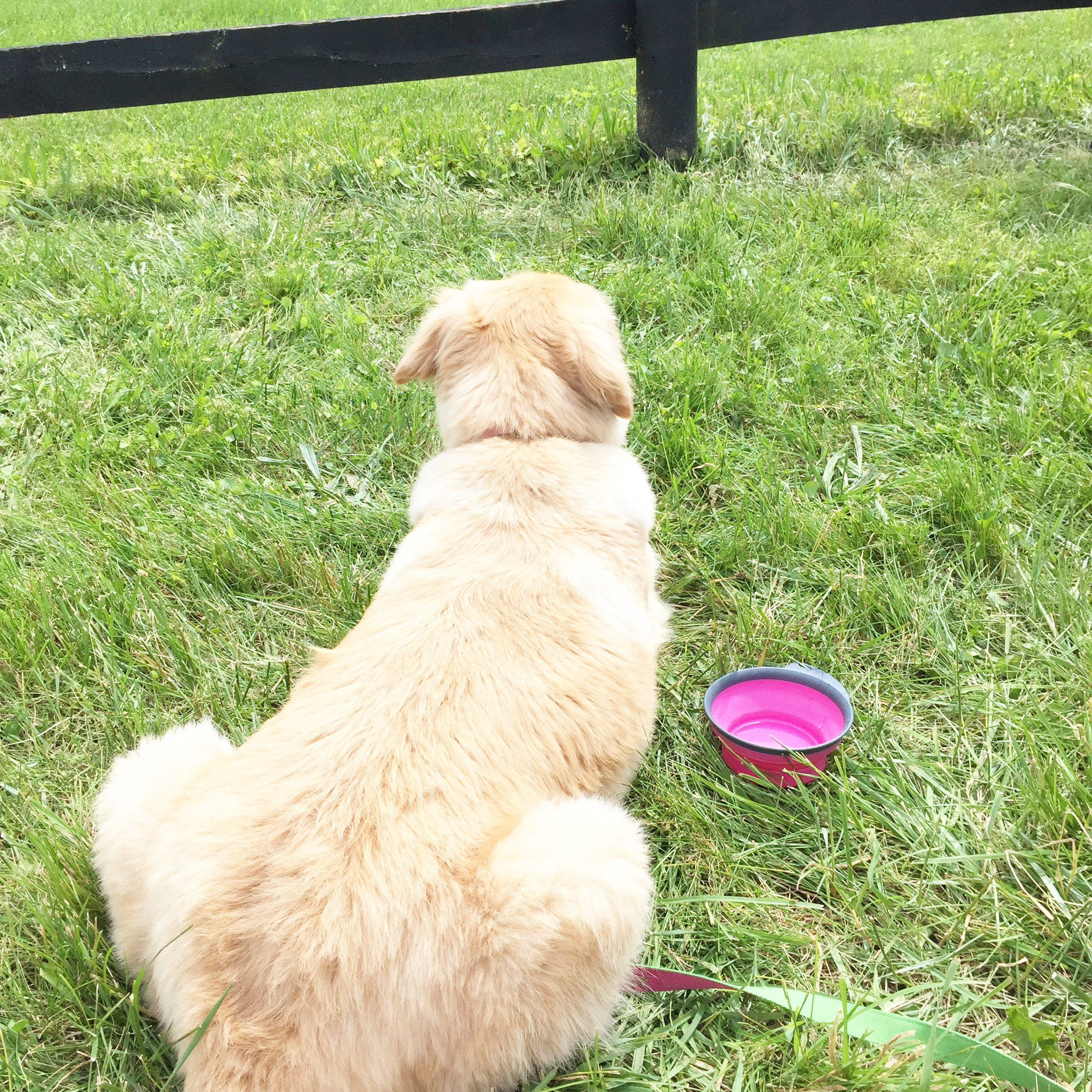 Annabelle loved watching the horses run by at the High Hope Steeplechase. I think it was one of her best days every!