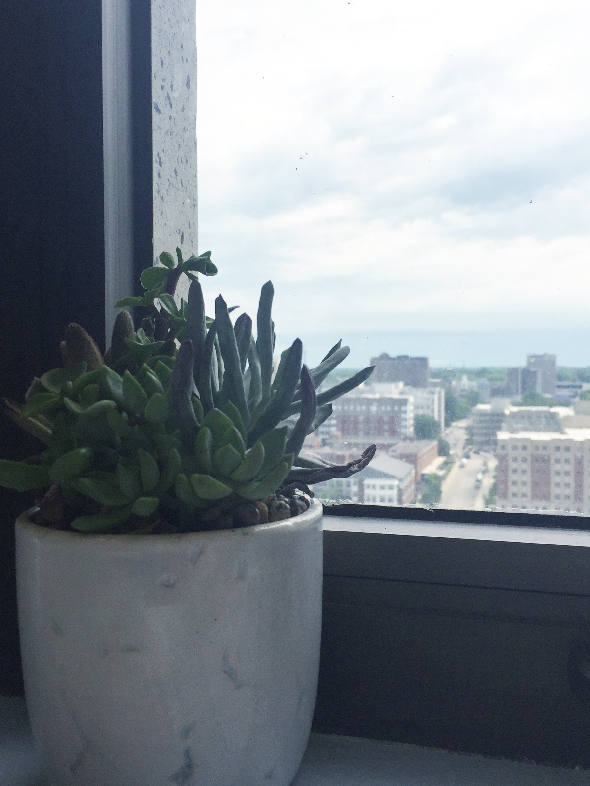 Office succulent with some shriveled up fronds.