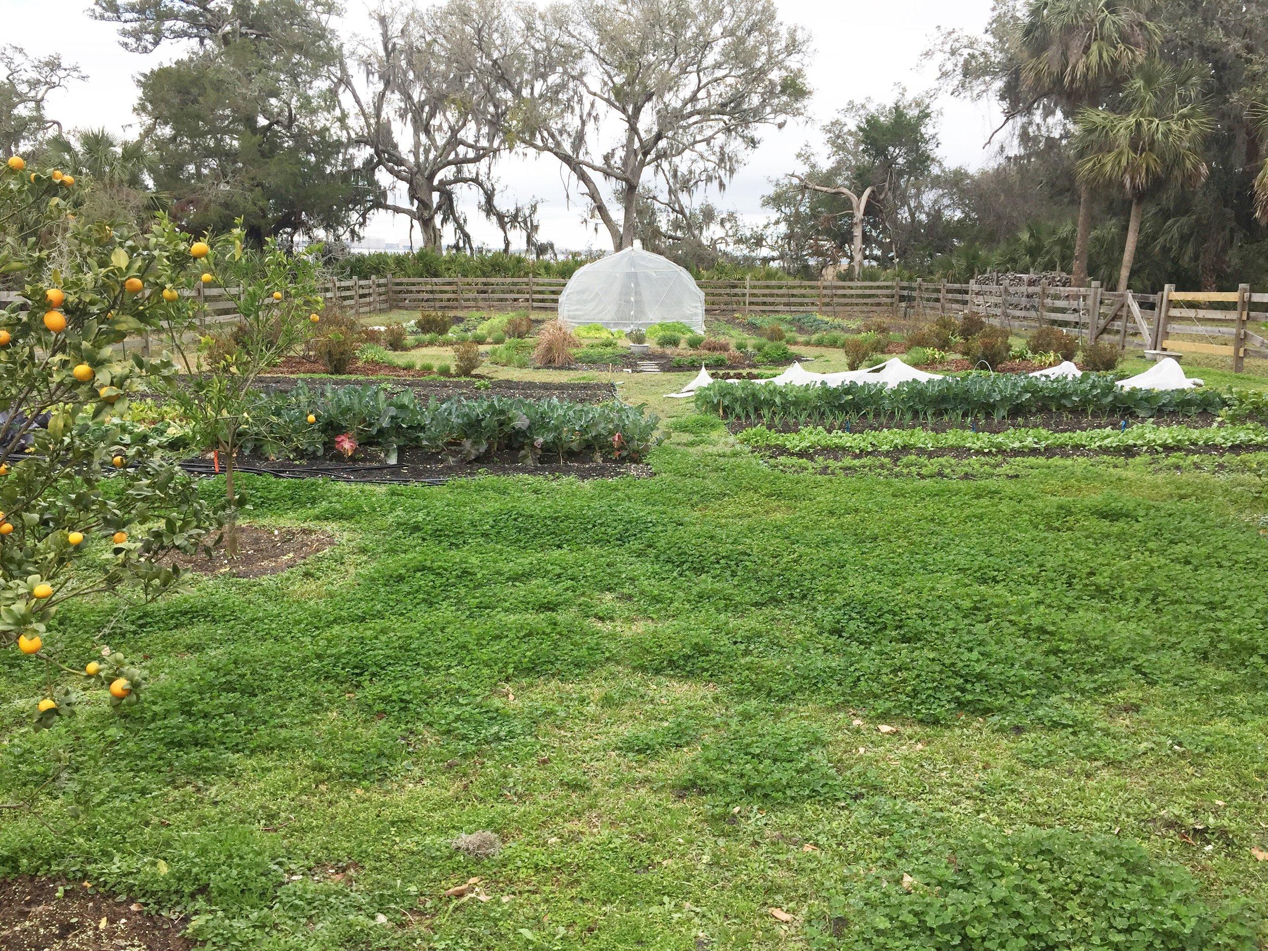 Greyfield Garden.JPG