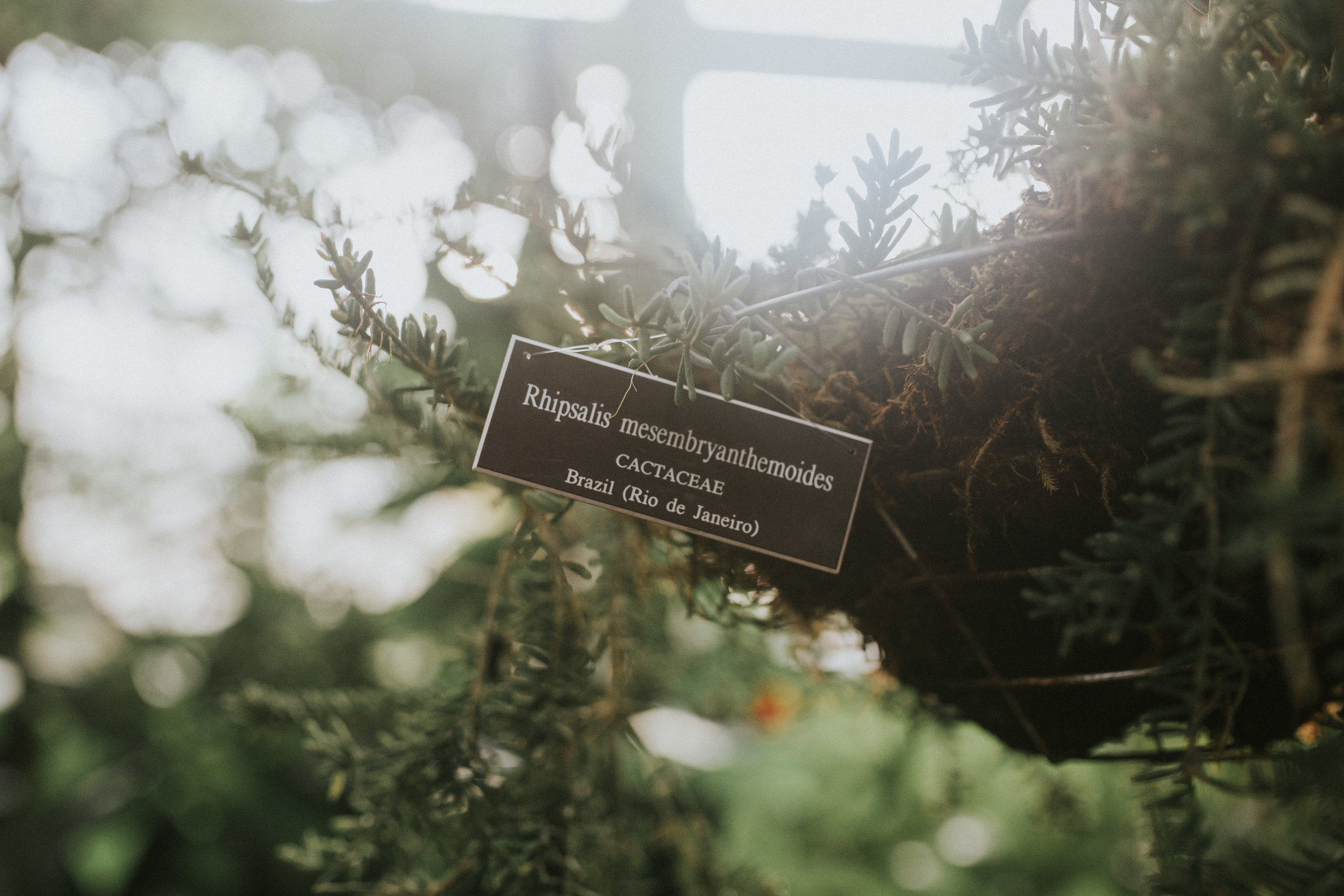 New York Botanical Garden Greenhouse photoshoot southwestern vibe lxc lookbook