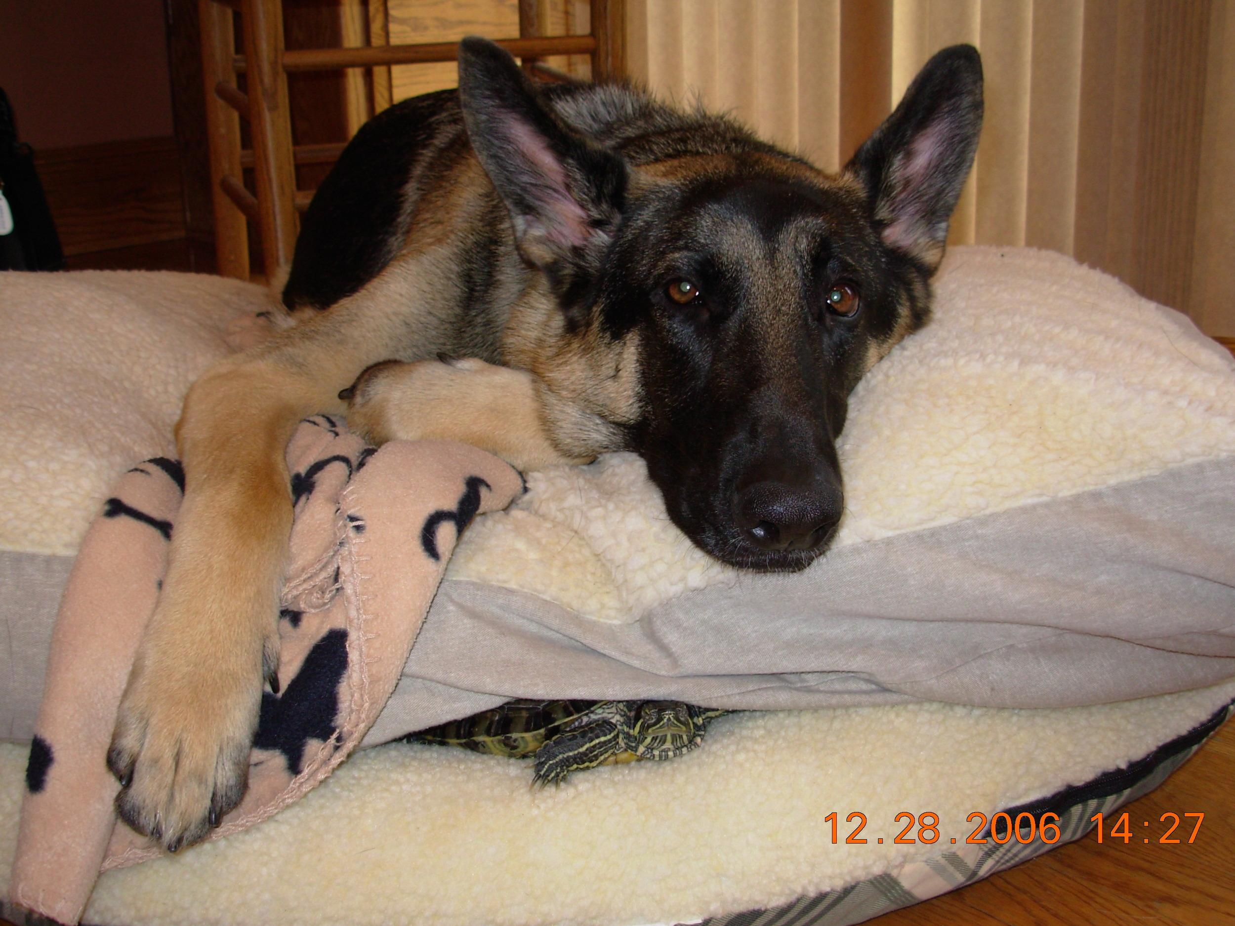Meiko - June 30,2005 - April 18, 2012