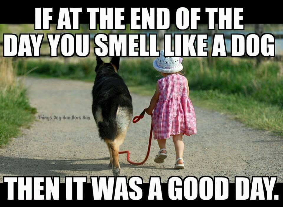 End of Day GSD.jpg