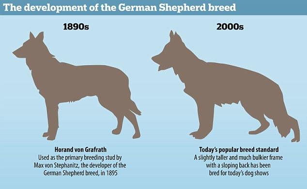 breed changes.jpg