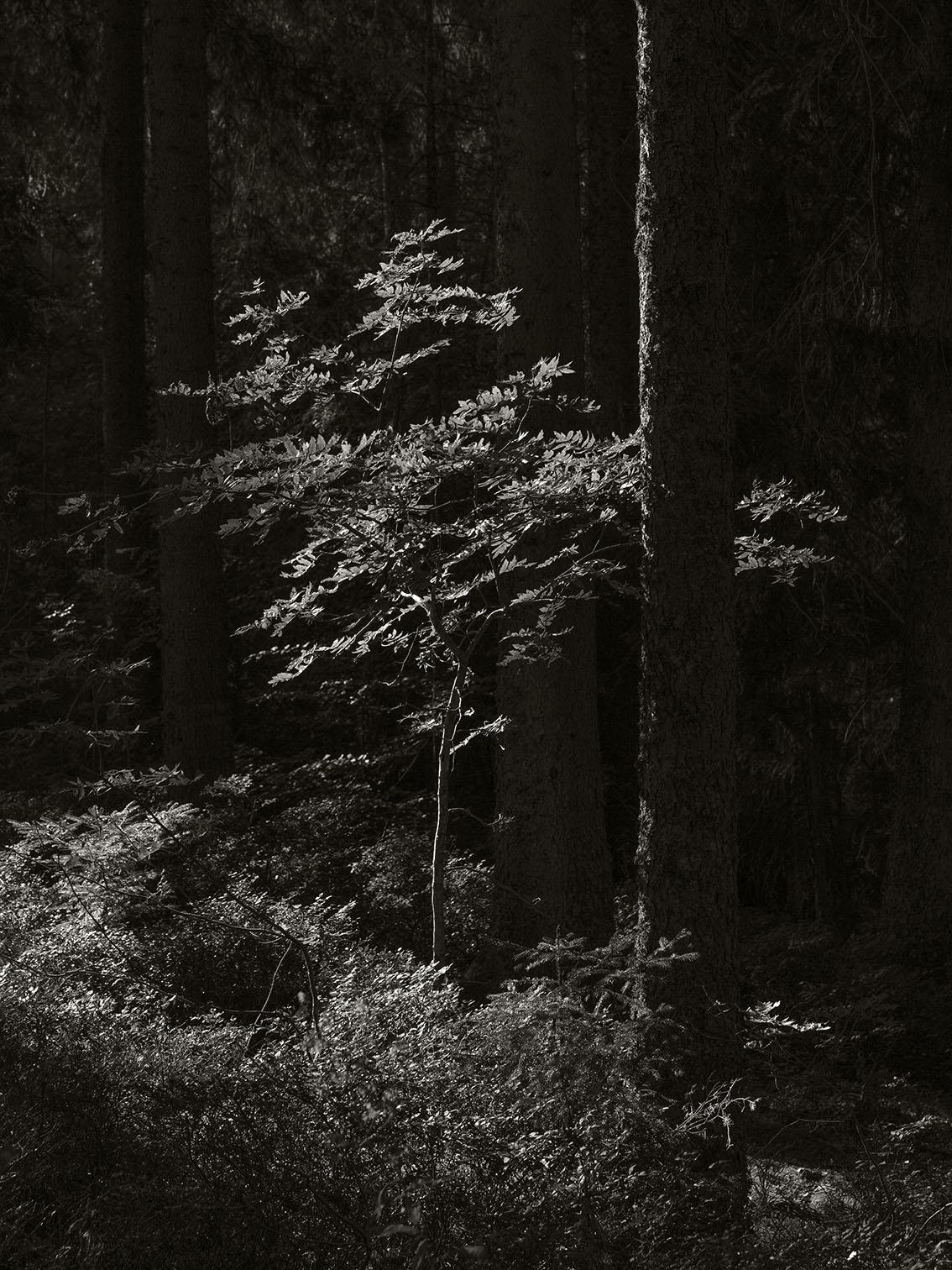 woods around the Windgfällweiher, Germany