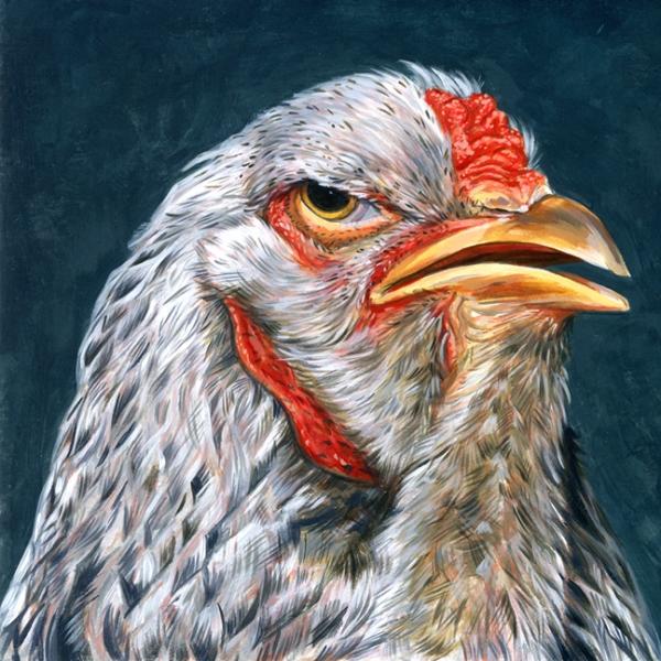 Brahma-Dark Hen